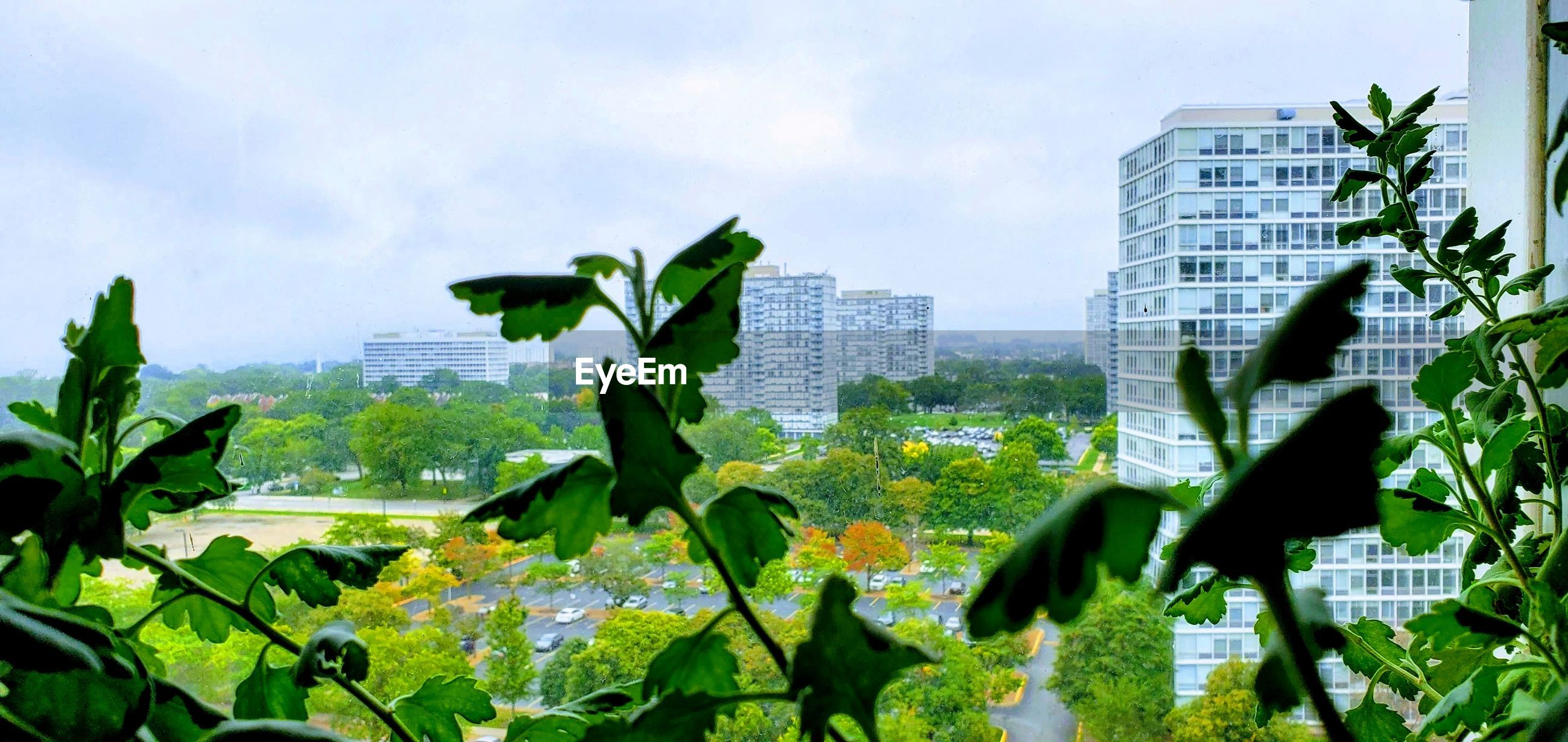 PLANTS AGAINST BUILDINGS IN CITY