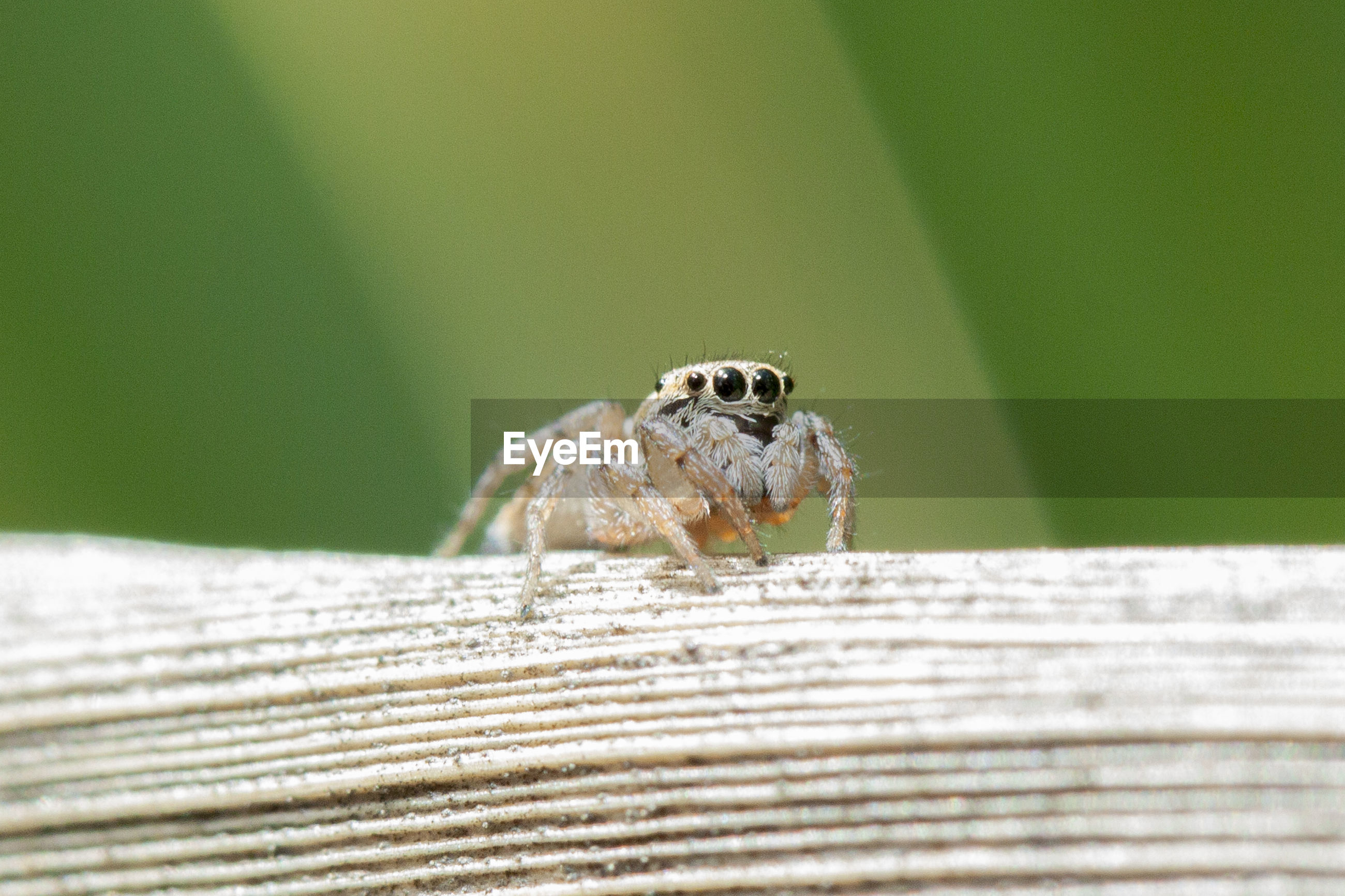 CLOSE-UP OF SPIDER ON WOODEN WALL