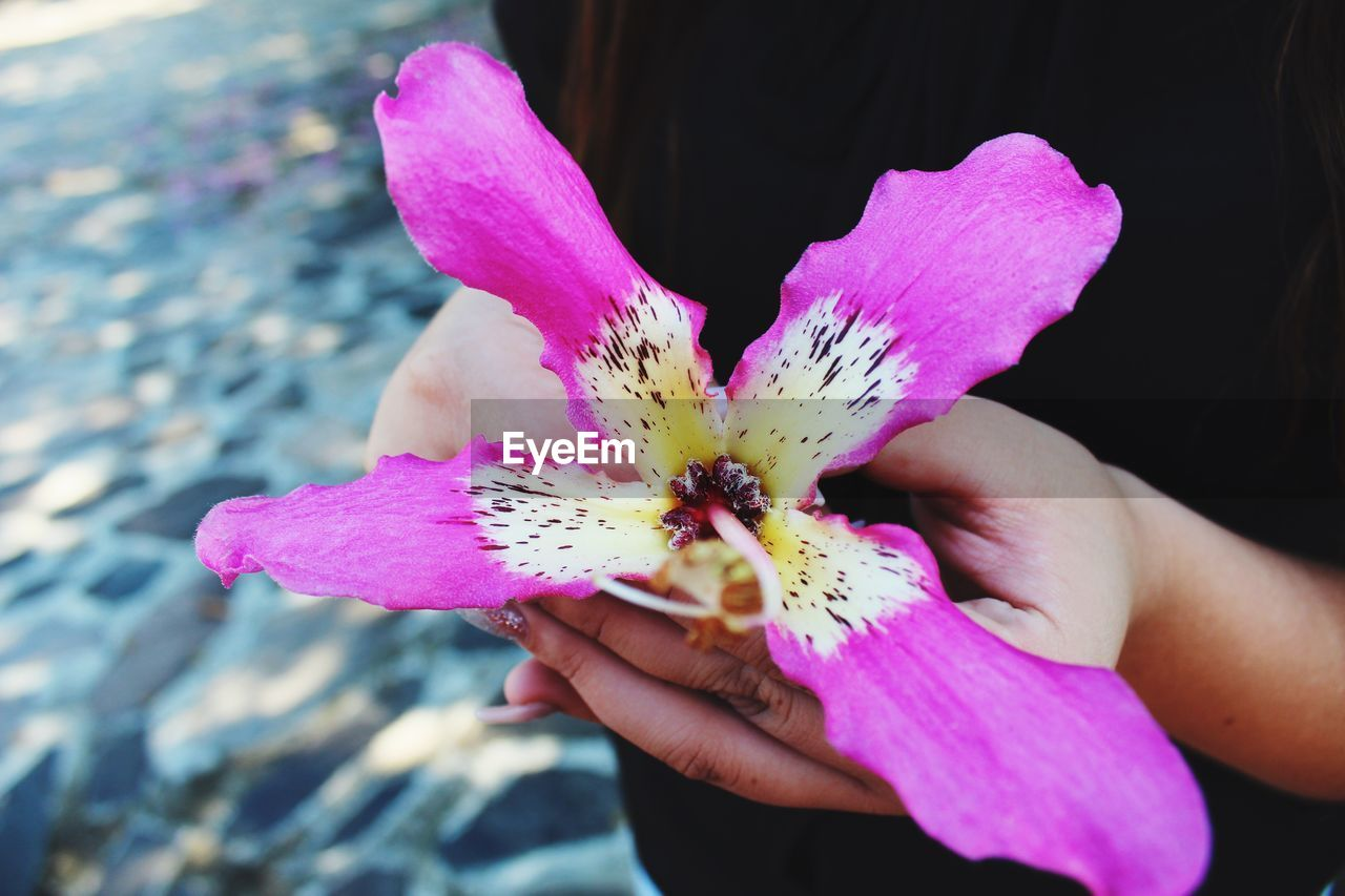 flower, petal, flower head, fragility, beauty in nature, nature, freshness, pink color, outdoors, real people, day, close-up, blooming, one person