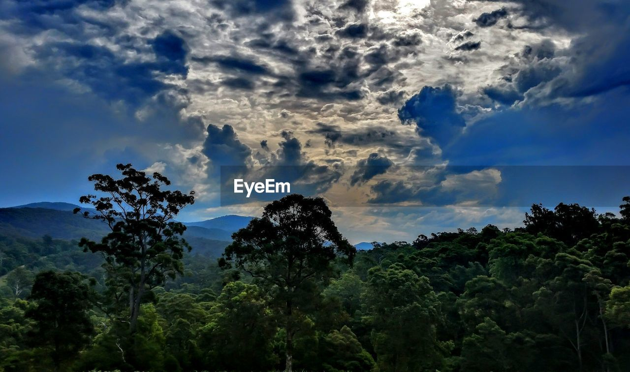 sky, tree, nature, cloud - sky, beauty in nature, no people, low angle view, growth, tranquility, scenics, outdoors, day