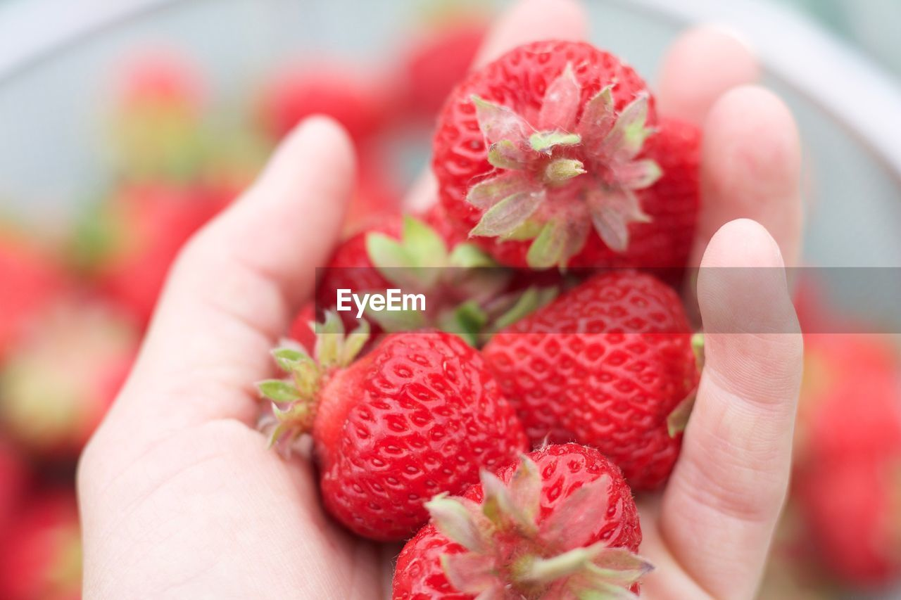 human hand, hand, human body part, holding, one person, red, berry fruit, freshness, real people, strawberry, fruit, healthy eating, body part, close-up, food and drink, food, personal perspective, unrecognizable person, finger, human finger, human limb