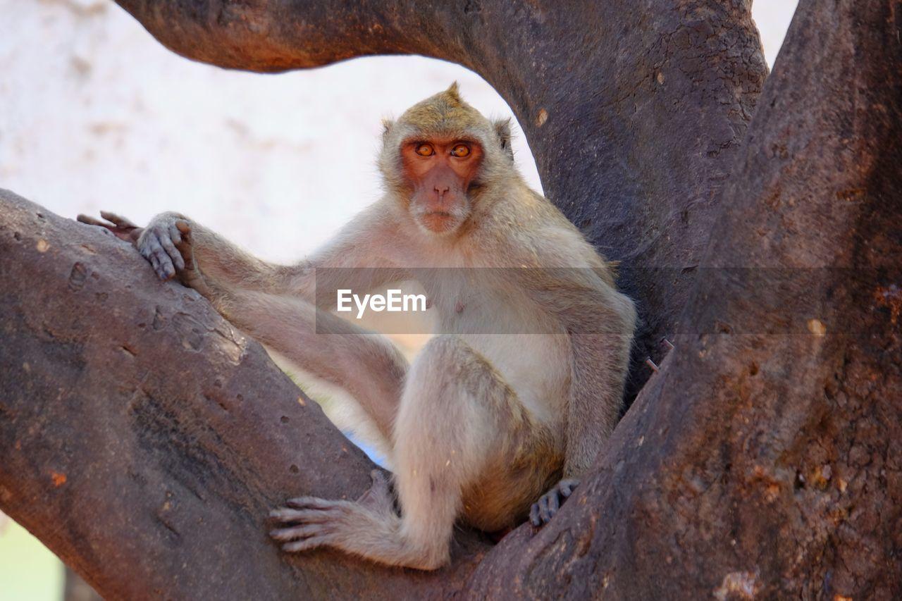 Portrait Of Monkey Sitting On Branch