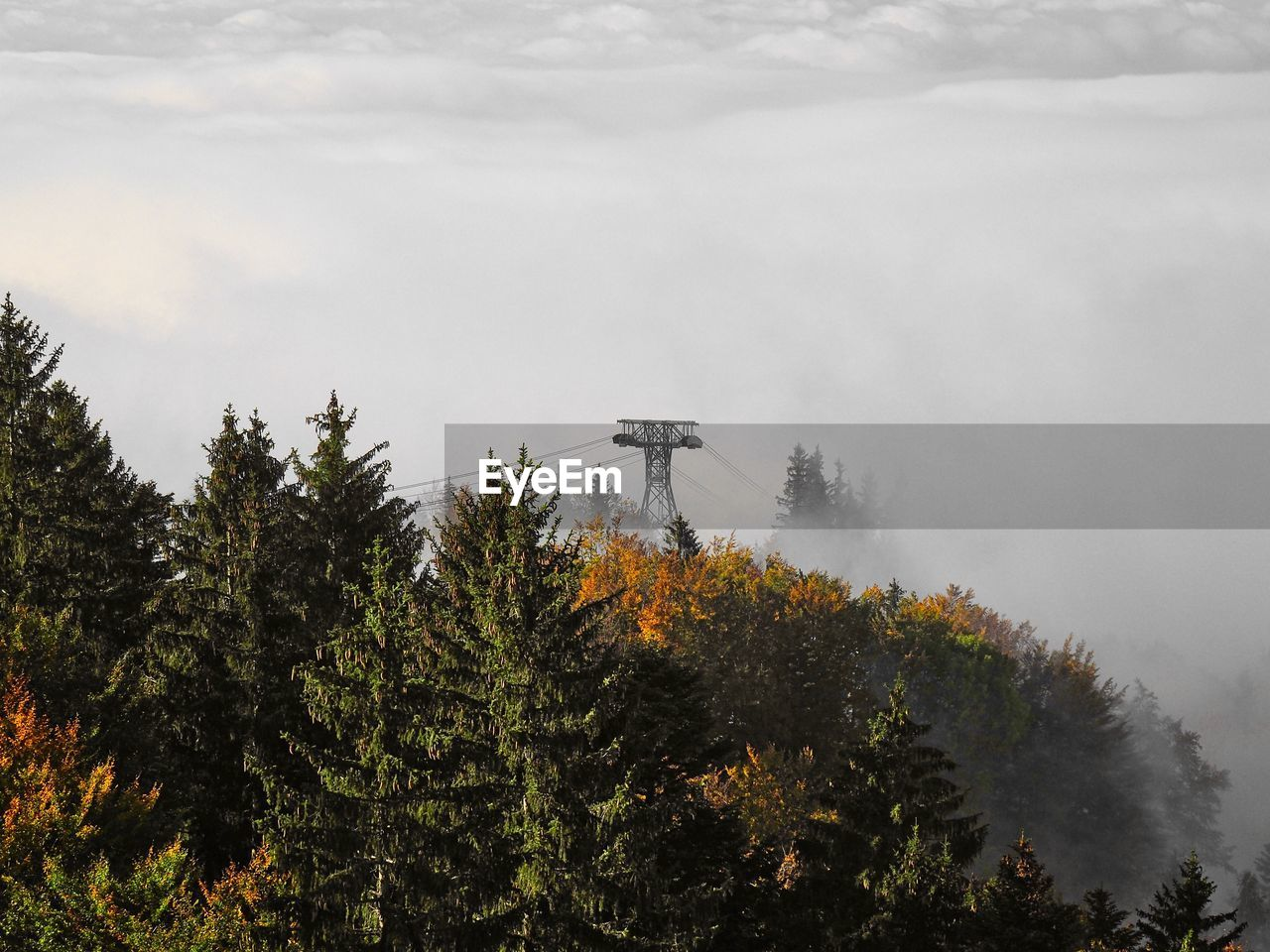 tree, plant, nature, sky, growth, cloud - sky, beauty in nature, no people, fog, day, forest, tranquil scene, scenics - nature, connection, outdoors, tranquility, built structure, non-urban scene, architecture, change, coniferous tree