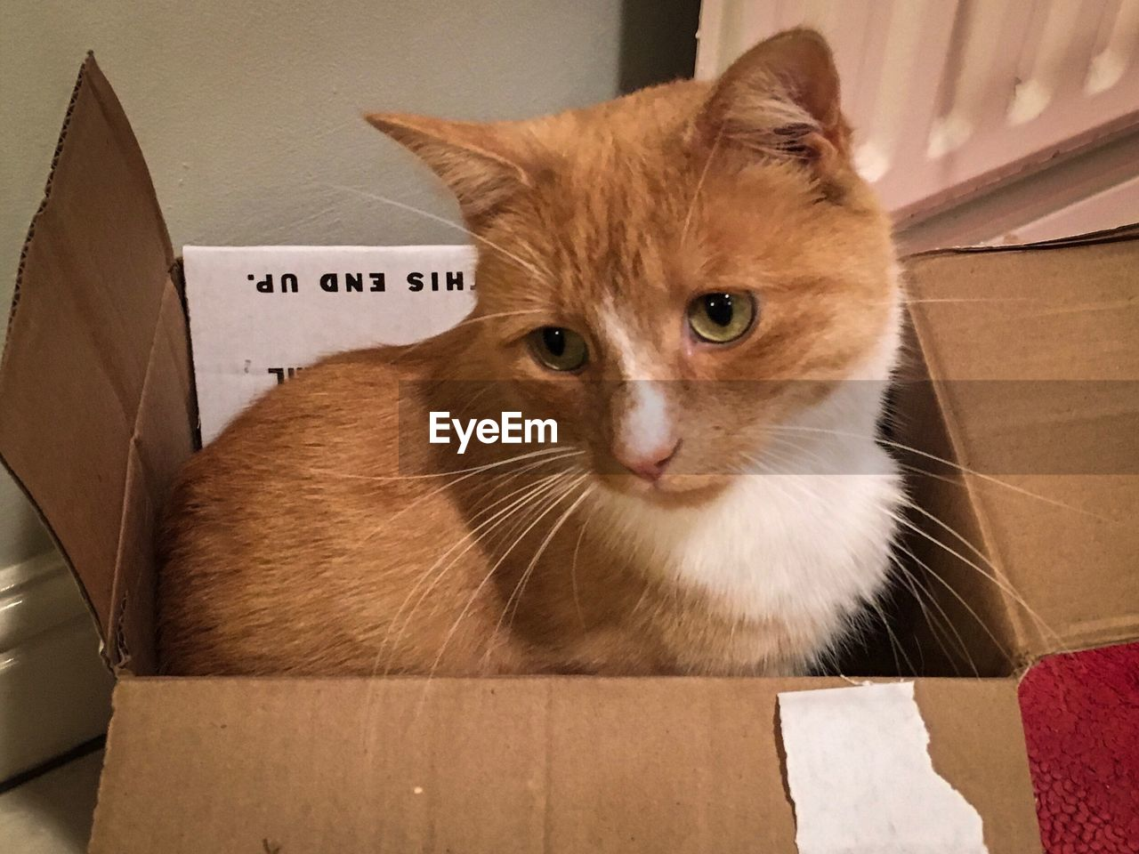 pets, cardboard, domestic, animal themes, animal, mammal, cardboard box, domestic animals, domestic cat, cat, box, vertebrate, one animal, feline, box - container, indoors, container, whisker, no people, portrait, ginger cat