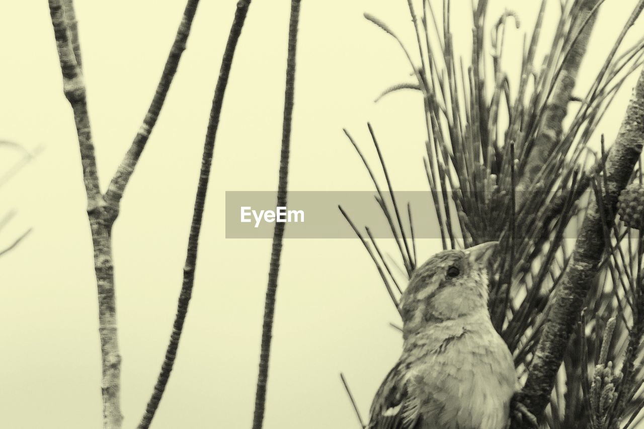 one animal, animal themes, animals in the wild, bird, nature, animal wildlife, no people, day, outdoors, beauty in nature, perching, grass, close-up