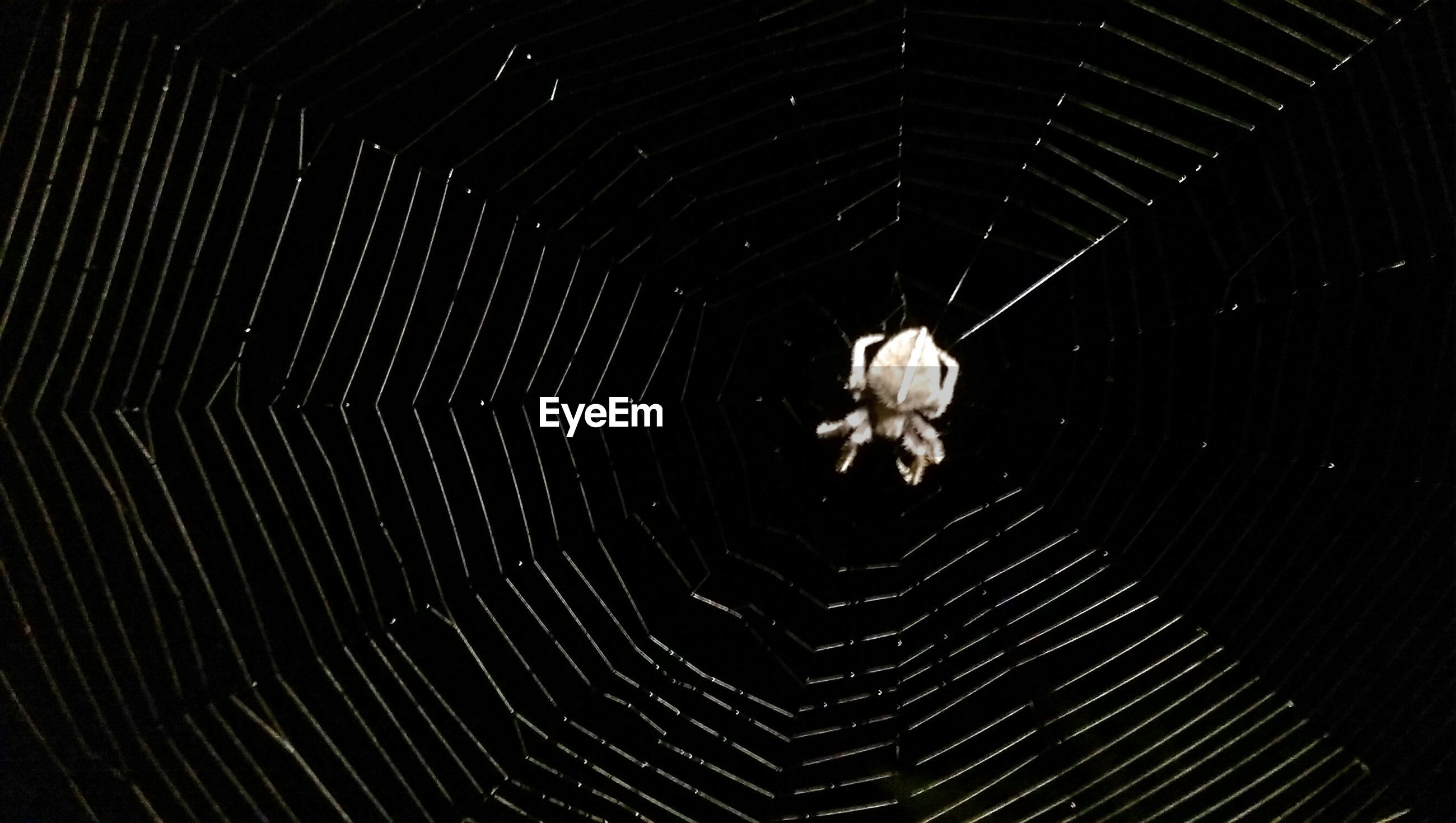 High angle view of spider on web