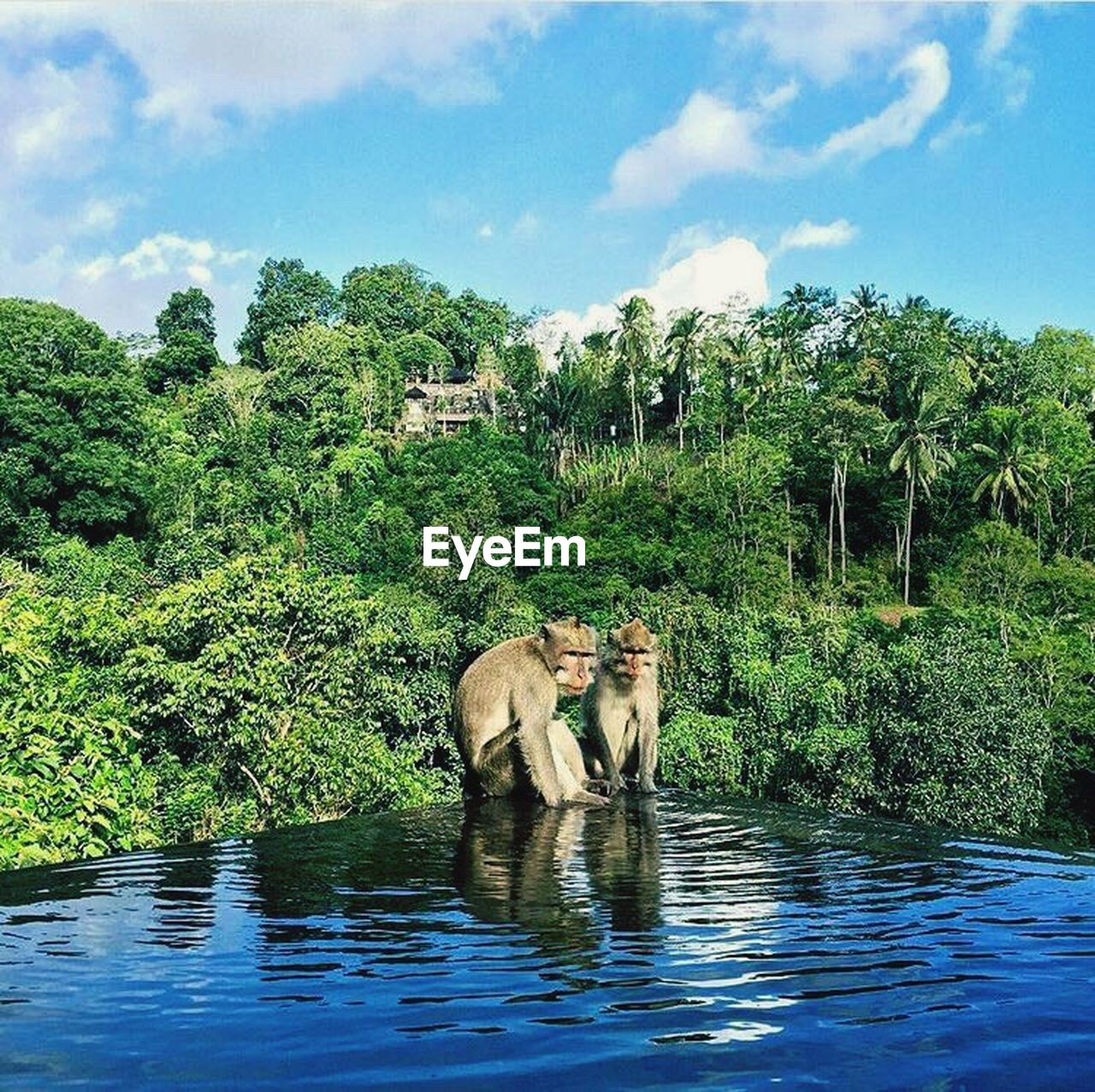 tree, water, mammal, sky, nature, animal themes, animals in the wild, outdoors, day, no people, green color, cloud - sky, growth, elephant, full length, plant, standing, safari animals, beauty in nature