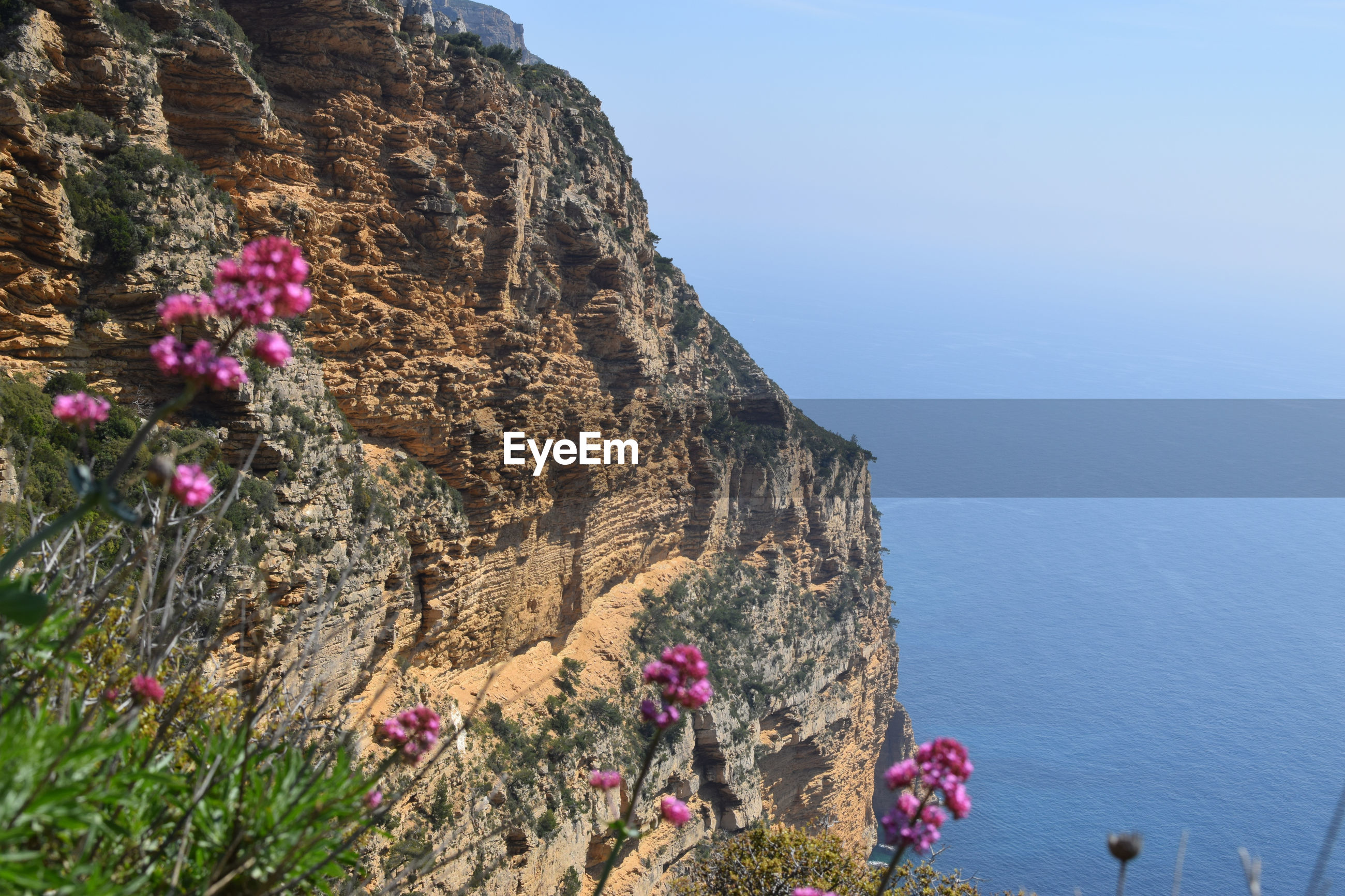 FLOWERS GROWING ON CLIFF AGAINST SKY