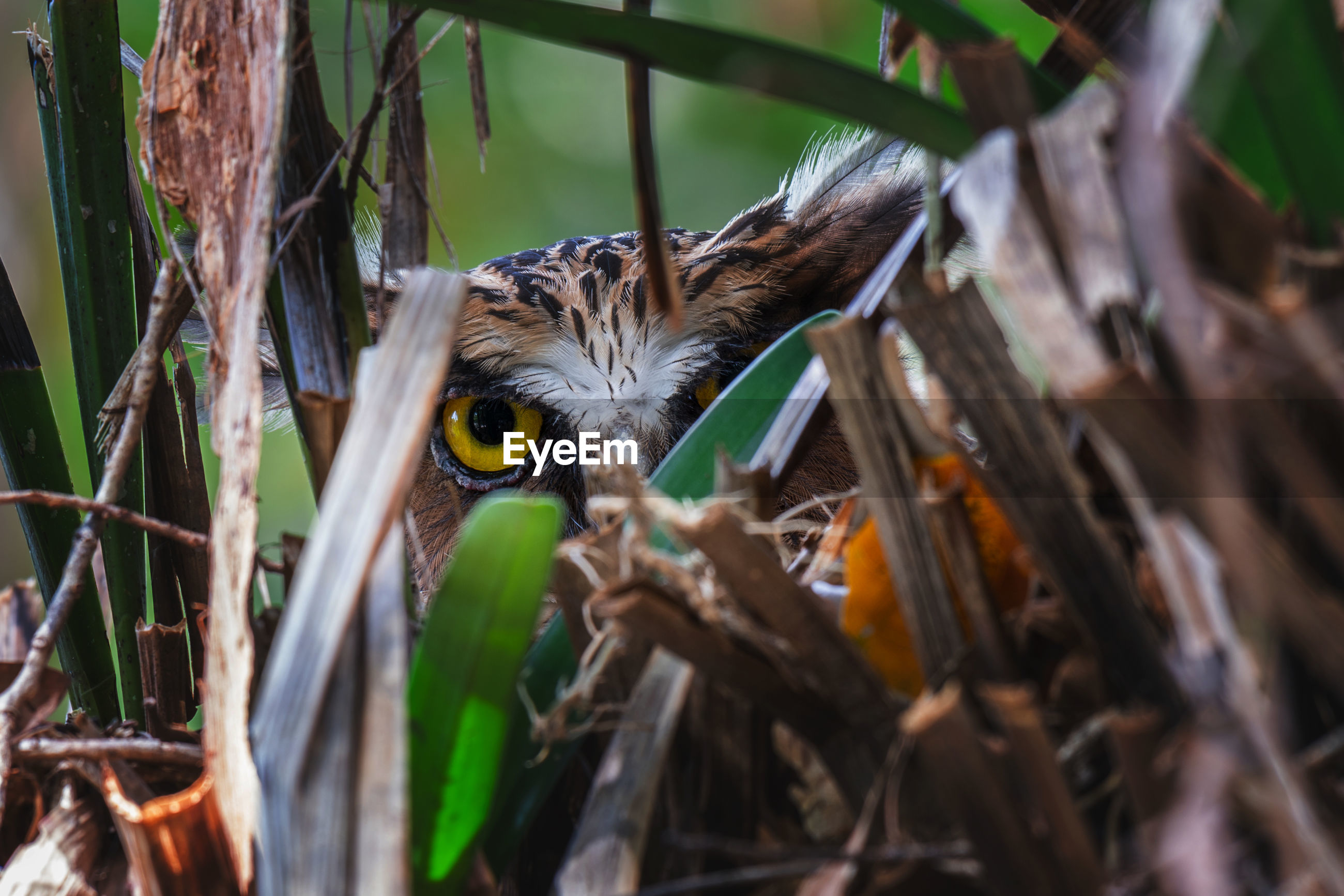 Close-up of owl peeking through plants