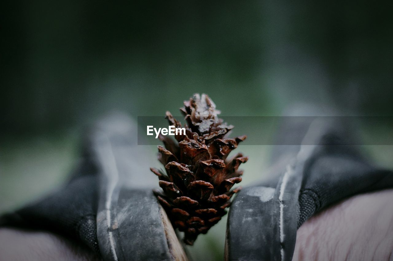 Low Section Of Man With Pine Cone