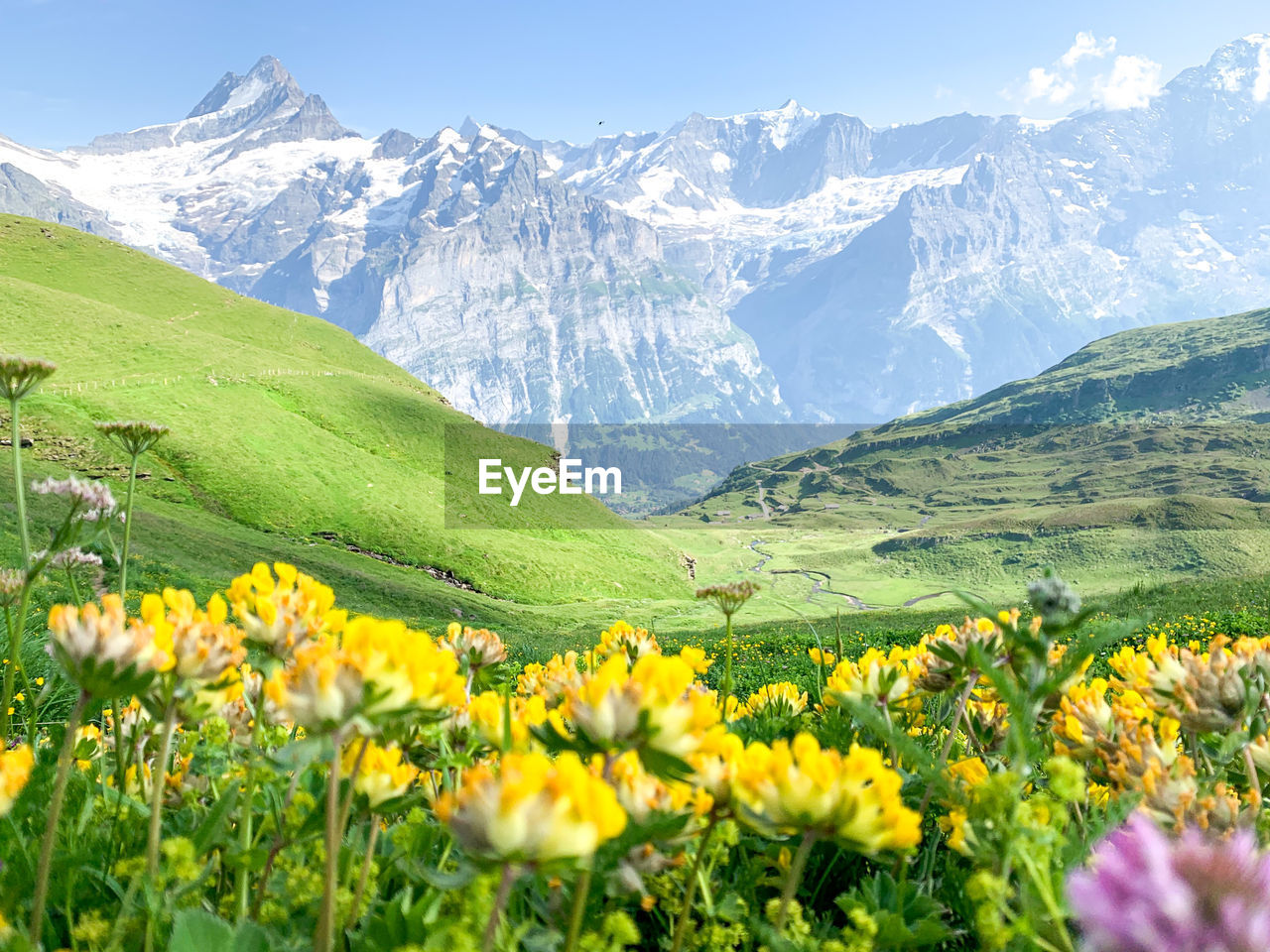 SCENIC VIEW OF FLOWERING PLANTS AND MOUNTAINS