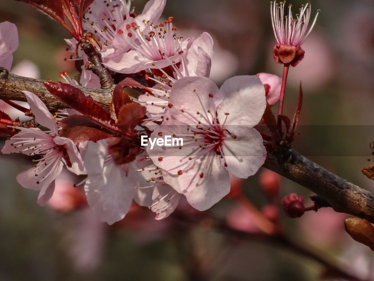 flower, fragility, beauty in nature, blossom, nature, petal, growth, freshness, springtime, tree, botany, flower head, stamen, branch, white color, close-up, no people, focus on foreground, day, outdoors, pollen, blooming