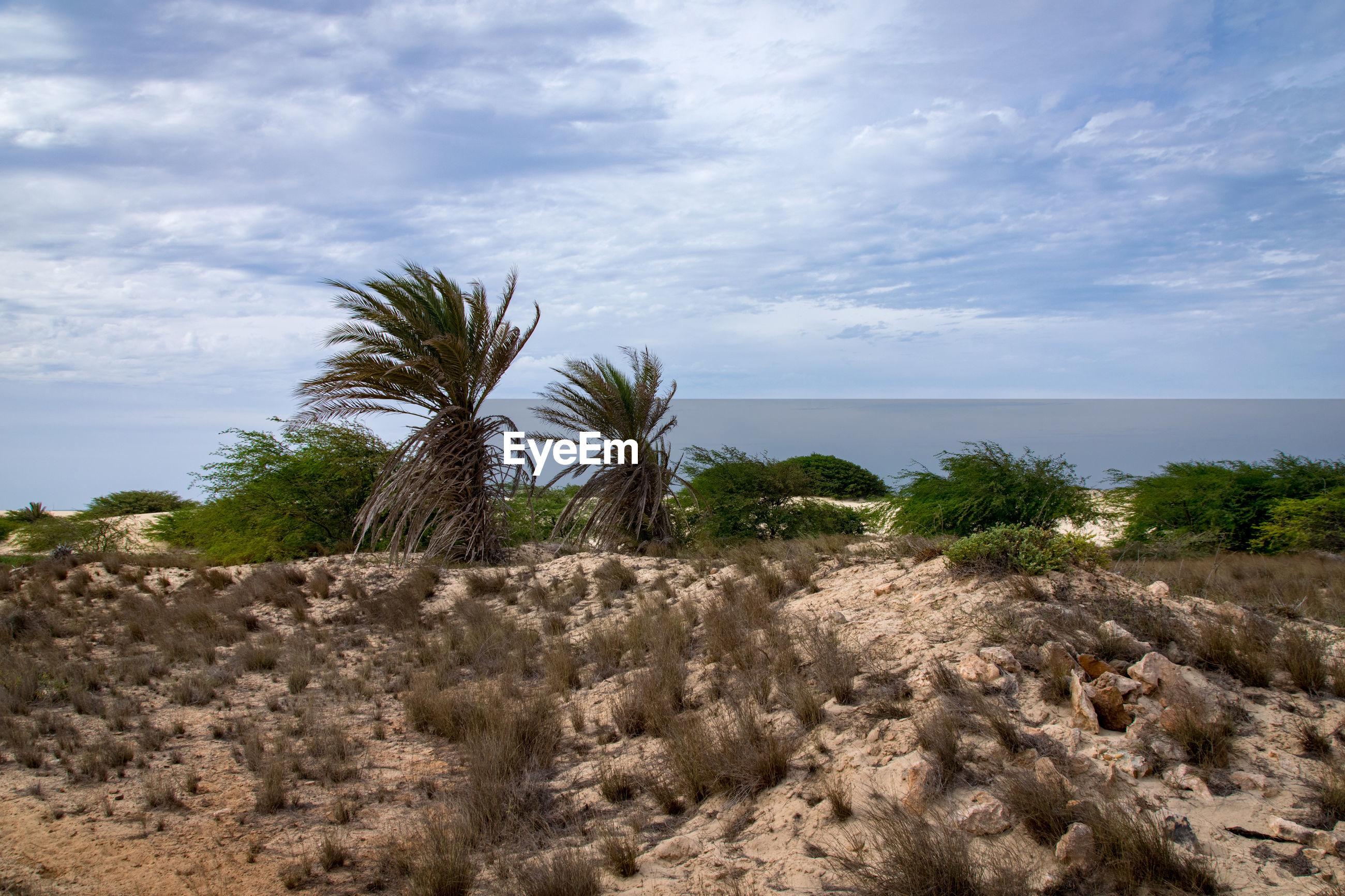 Arid and desert environment of boa vista, cape verde