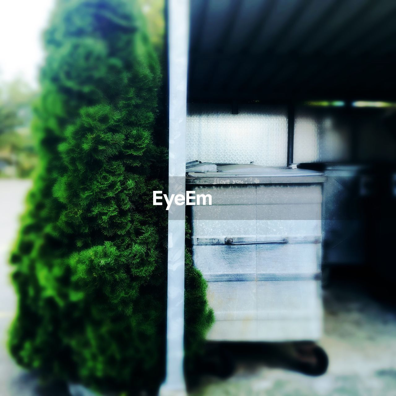 no people, selective focus, close-up, green color, day, outdoors, nature, architecture