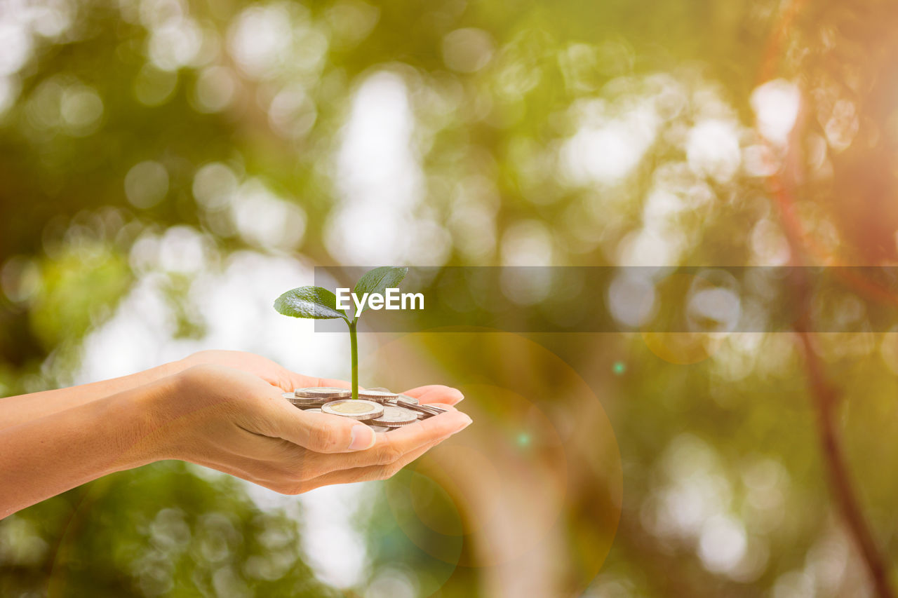 Cropped image of woman with hands cupped holding plant and coins