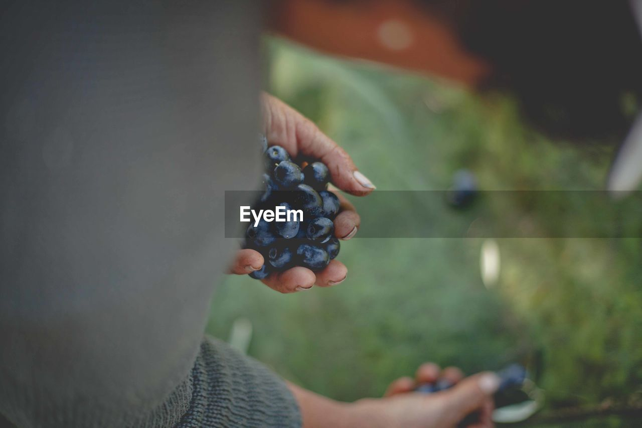 fruit, one person, human hand, hand, real people, berry fruit, holding, food and drink, healthy eating, food, lifestyles, human body part, blueberry, day, leisure activity, wellbeing, freshness, unrecognizable person, selective focus, outdoors, ripe, finger