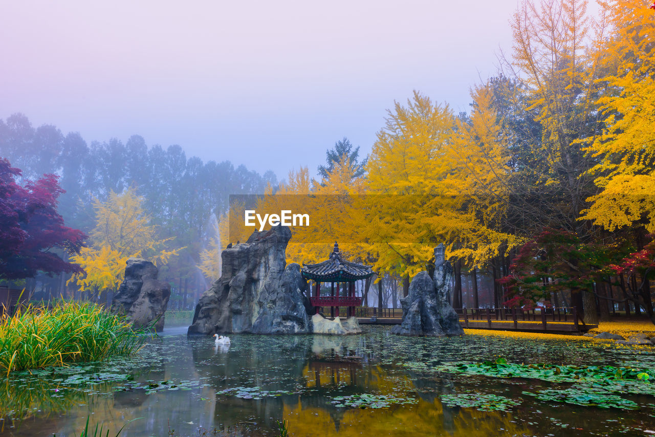 water, tree, plant, autumn, nature, change, beauty in nature, lake, reflection, no people, tranquility, sky, waterfront, scenics - nature, architecture, day, growth, tranquil scene, outdoors, autumn collection, flowing water