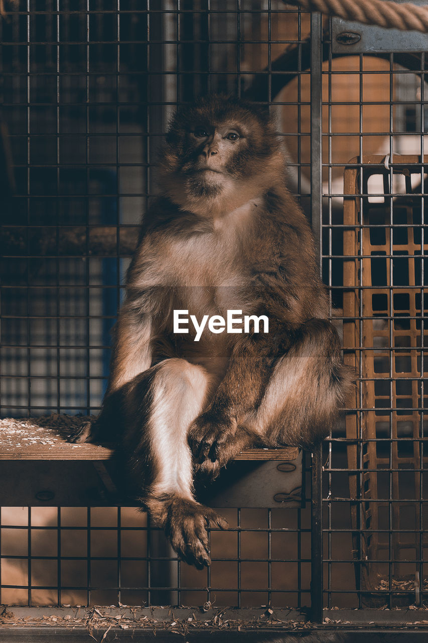 Portrait Of Monkey Sitting In Cage At Zoo