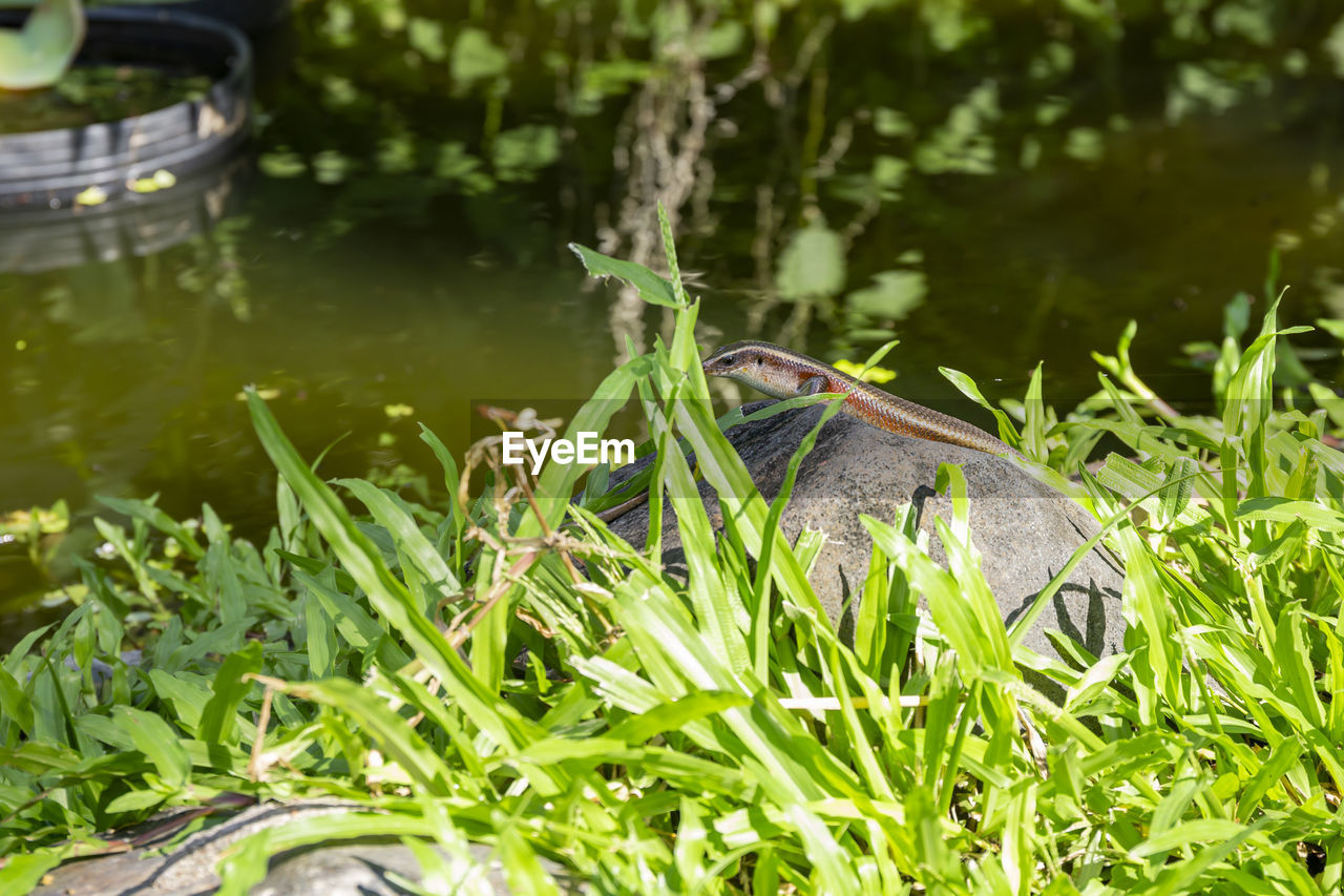 plant, animal, animal themes, one animal, grass, vertebrate, animals in the wild, animal wildlife, green color, nature, growth, day, no people, water, field, land, selective focus, bird, outdoors, blade of grass