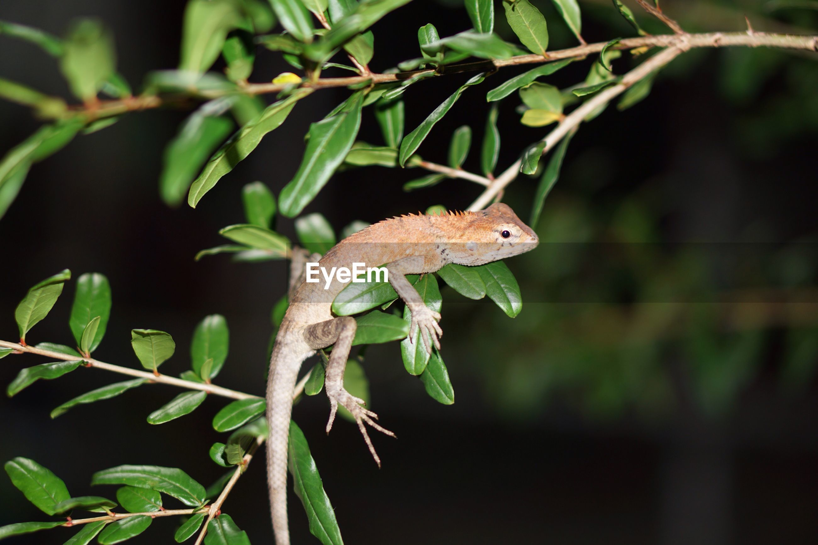 CLOSE-UP OF GREEN LIZARD ON TREE