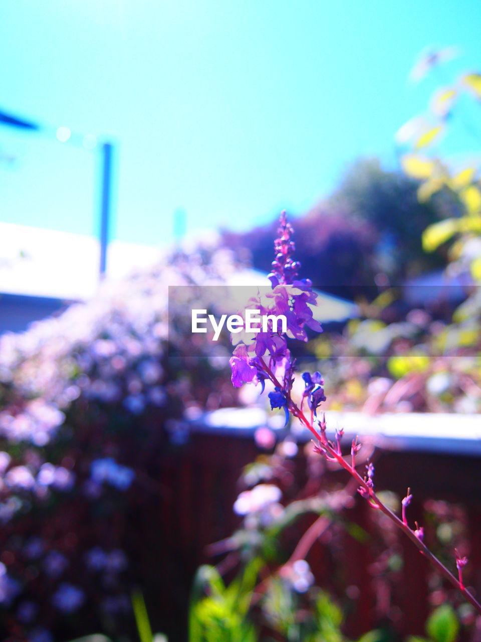nature, growth, plant, focus on foreground, fragility, beauty in nature, no people, day, flower, freshness, outdoors, close-up, tree