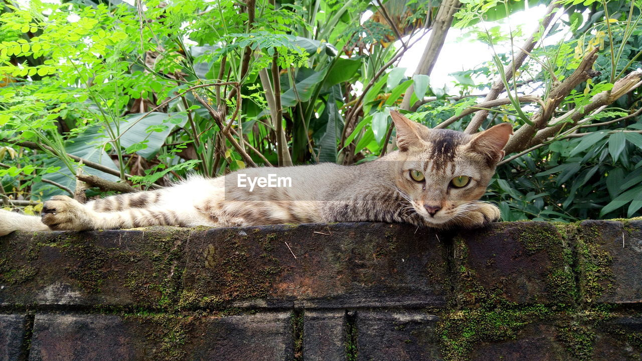 PORTRAIT OF CAT LYING BY RETAINING WALL