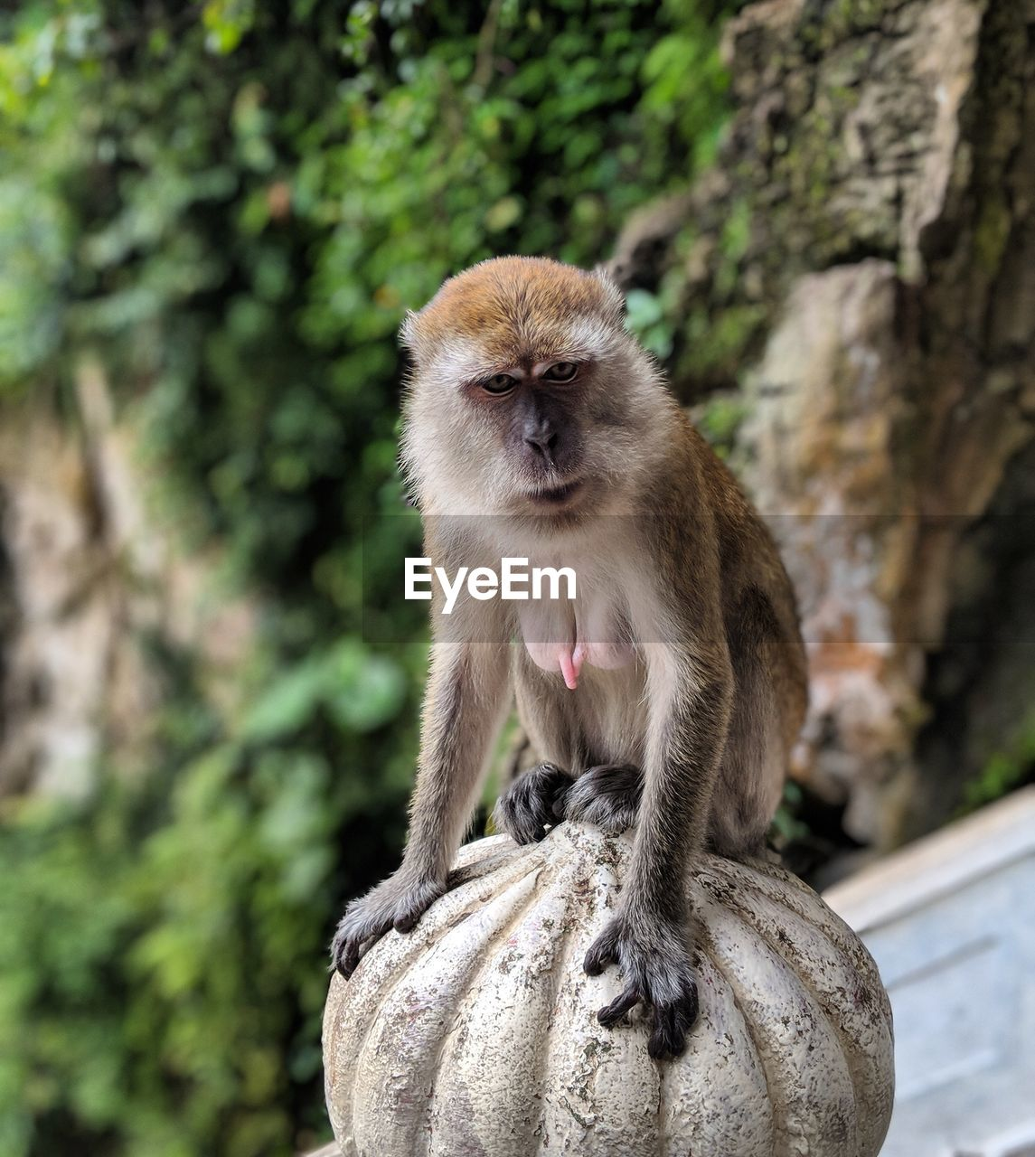 animal wildlife, animals in the wild, primate, one animal, mammal, sitting, vertebrate, focus on foreground, day, tree, no people, looking away, nature, plant, looking, outdoors, care