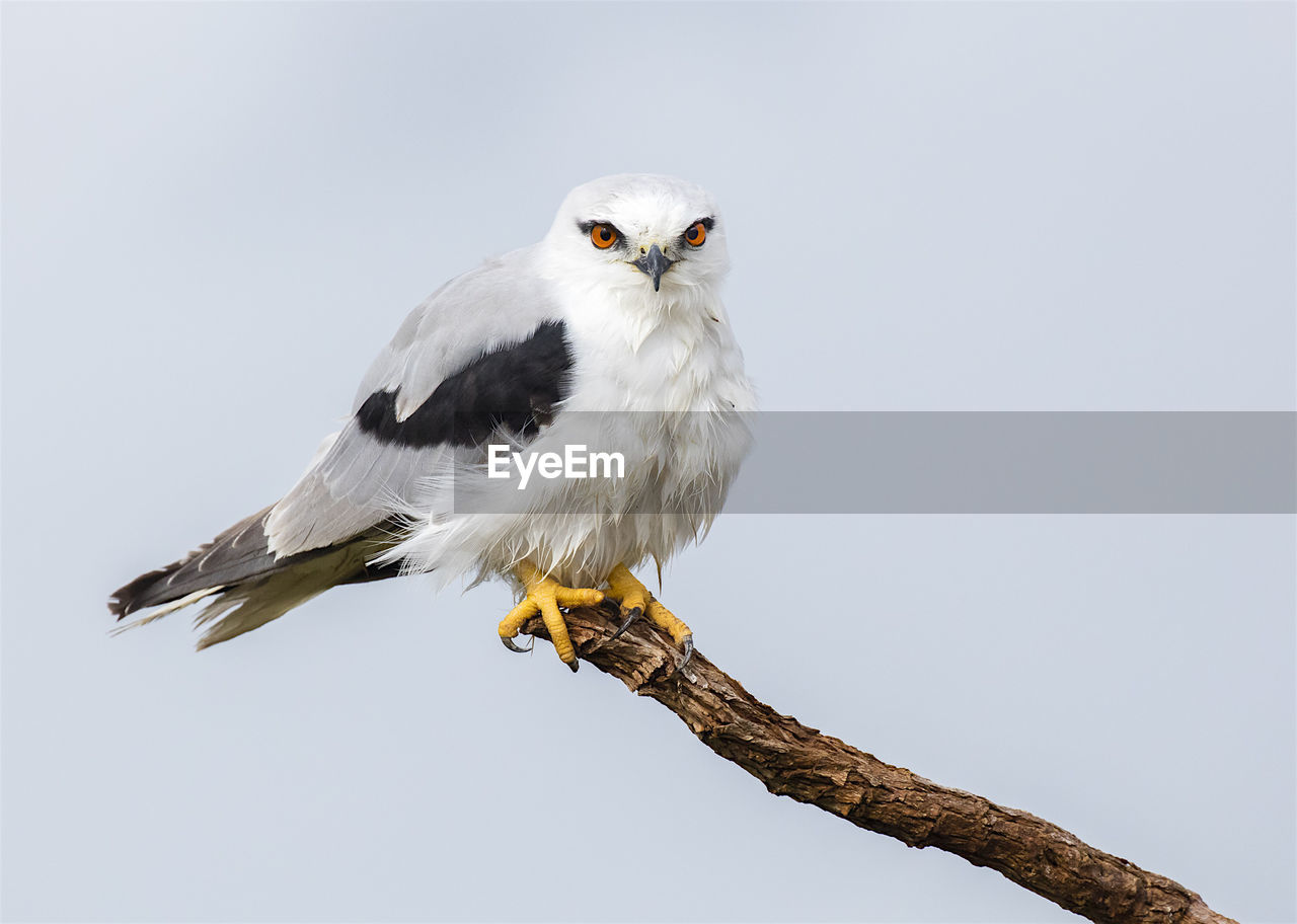 Close-Up Portrait Of Bird Perching On Branch