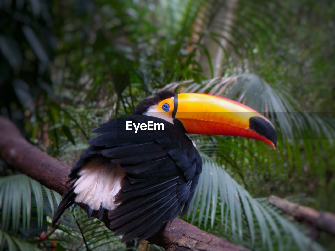 bird, animals in the wild, animal themes, one animal, animal wildlife, perching, nature, outdoors, day, beauty in nature, close-up, spread wings, tree, no people, hornbill