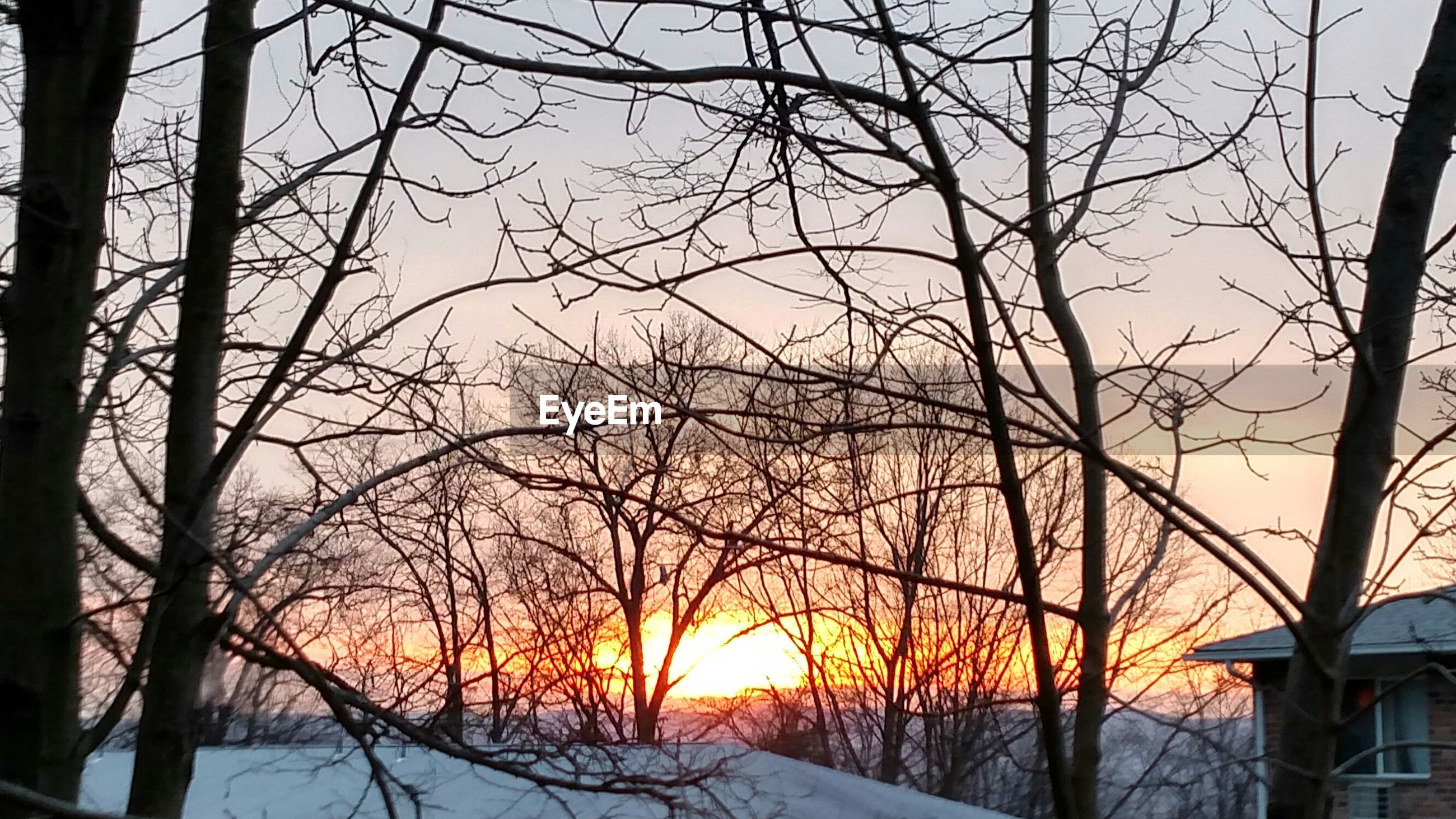 Bare trees in winter during sunset