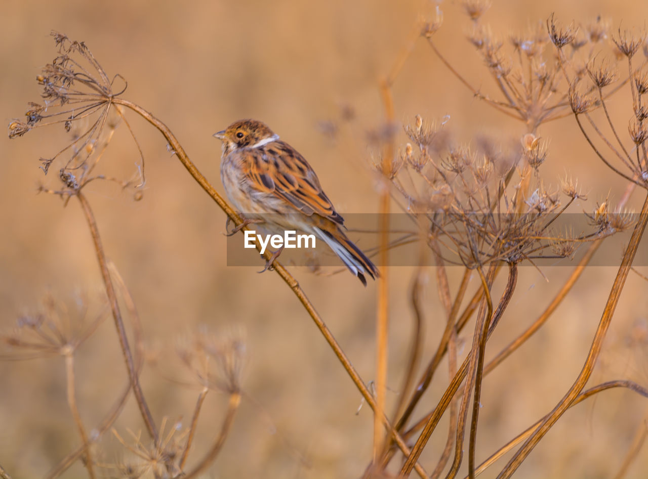 bird, plant, animal wildlife, animals in the wild, animal, animal themes, vertebrate, one animal, perching, focus on foreground, no people, nature, dried plant, tree, day, beauty in nature, selective focus, close-up, branch, dry, dead plant