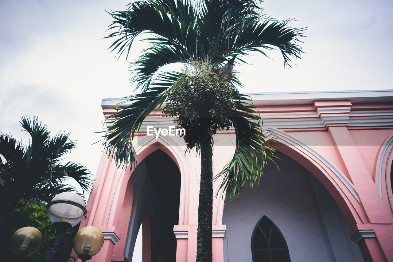 tropical climate, palm tree, tree, plant, sky, low angle view, architecture, built structure, nature, building exterior, arch, no people, growth, day, outdoors, building, leaf, tree trunk, clear sky, trunk, architectural column, palm leaf