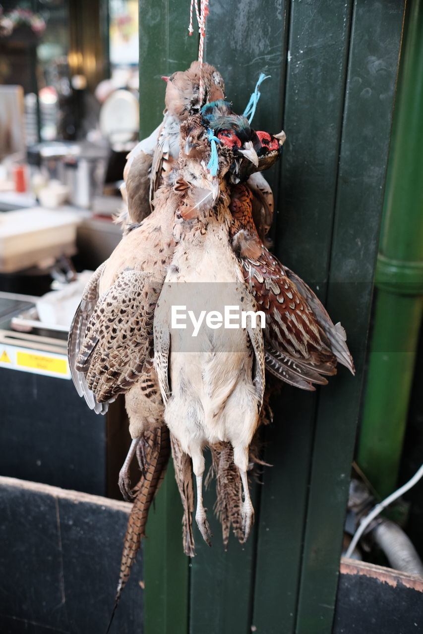 Close-Up Of Pheasants For Sale At Butcher Shop