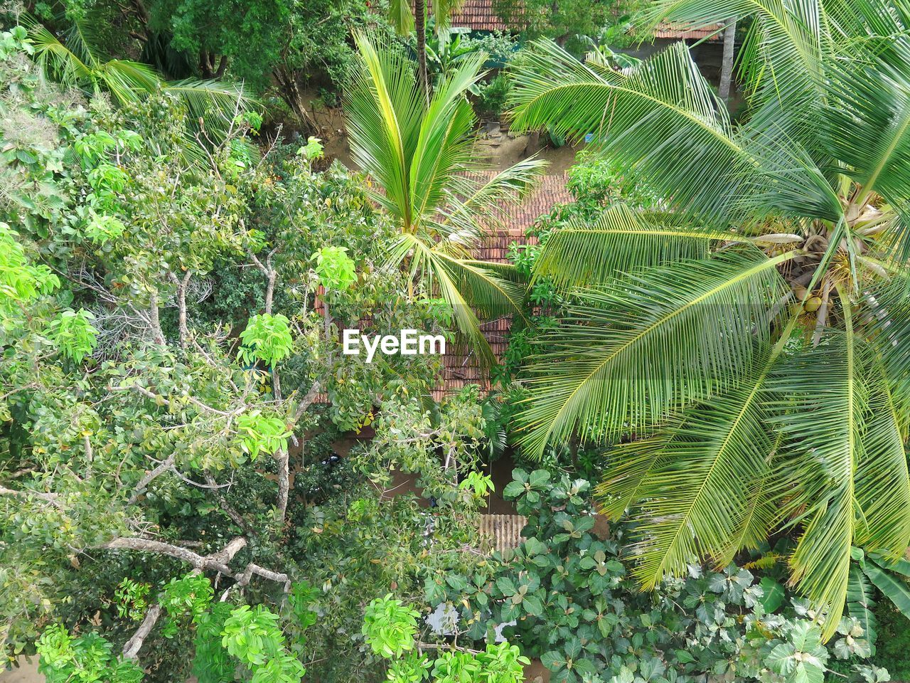 growth, green color, plant, leaf, nature, banana tree, no people, outdoors, beauty in nature, tree, day, freshness