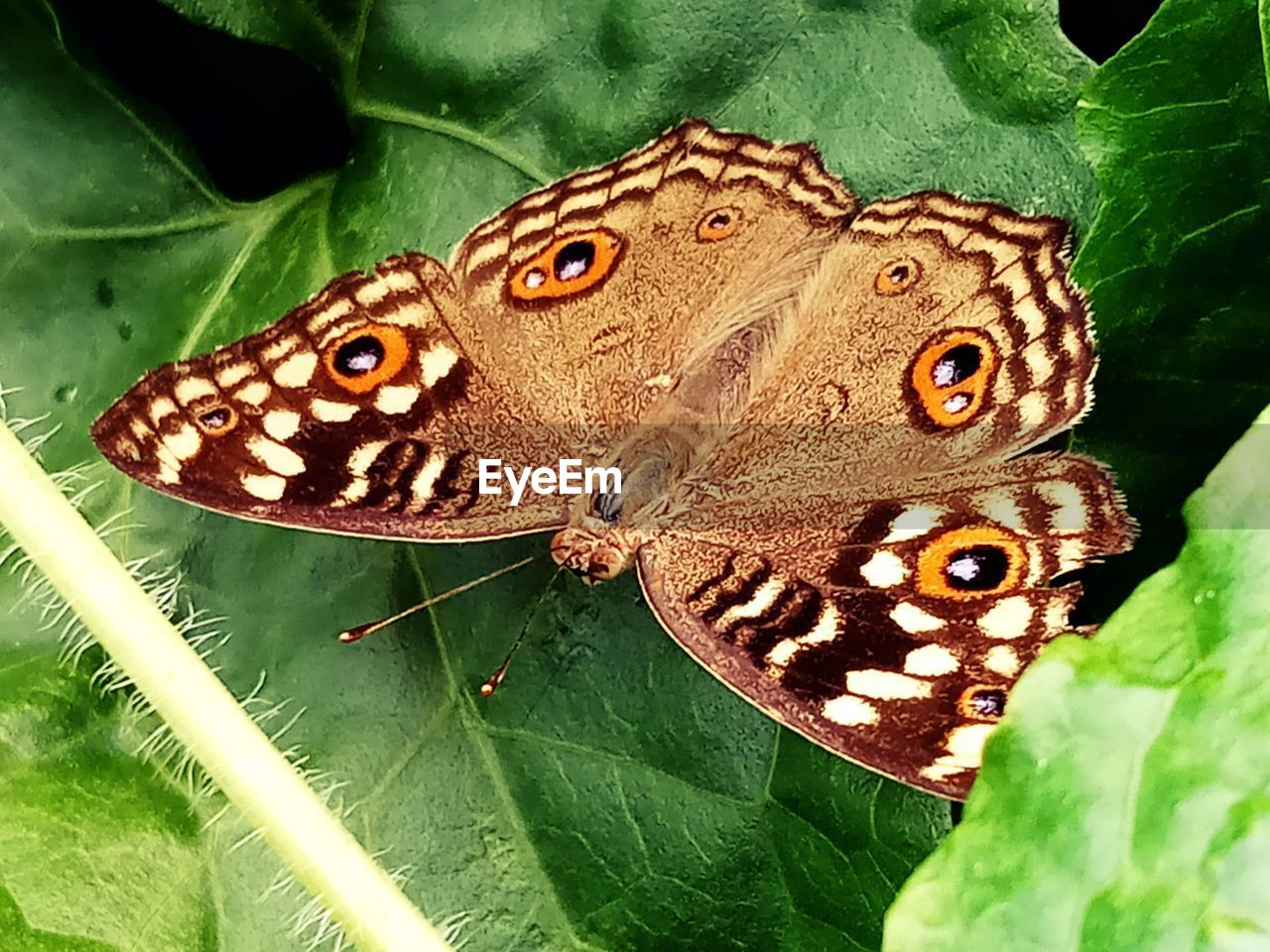 animal wildlife, animal themes, animal, plant part, animals in the wild, leaf, one animal, insect, butterfly - insect, close-up, invertebrate, green color, nature, animal wing, animal markings, beauty in nature, day, no people, plant, natural pattern, butterfly, outdoors, leaves