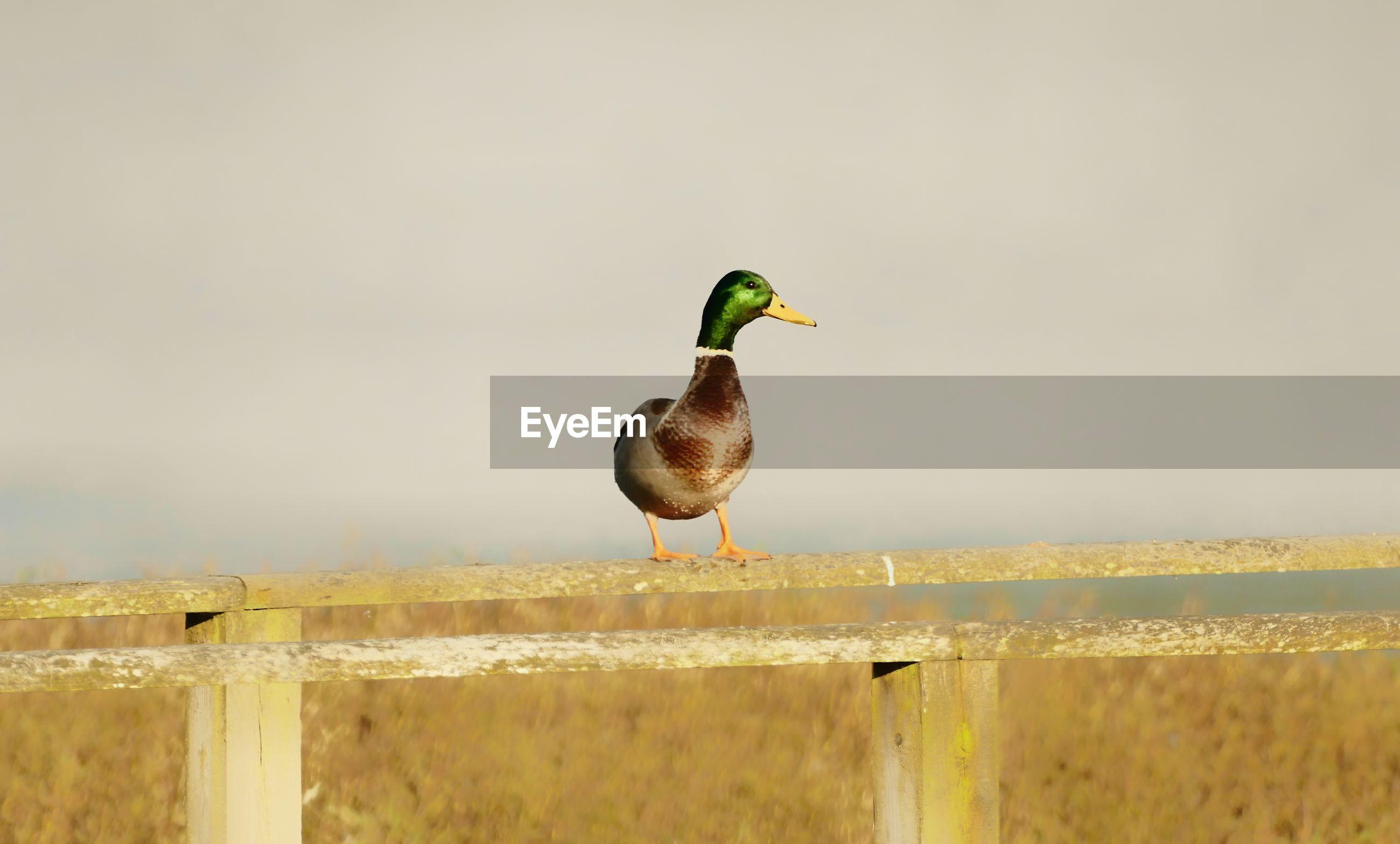 BIRD PERCHING ON GREEN AGAINST SKY