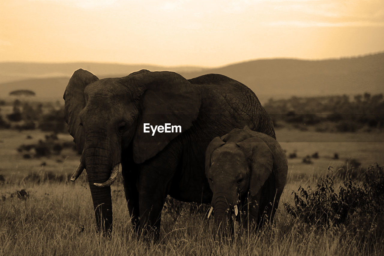 Family elephants portrait