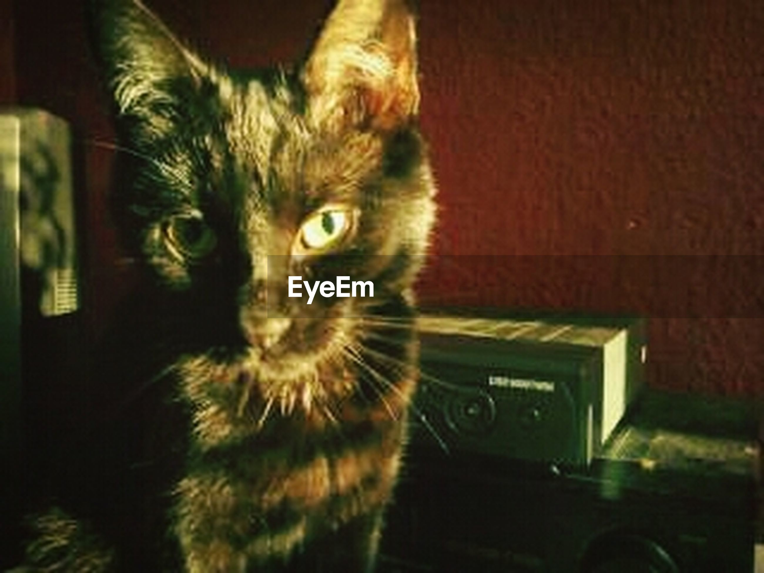 domestic cat, one animal, pets, domestic animals, cat, animal themes, indoors, feline, mammal, looking at camera, whisker, portrait, close-up, animal eye, animal head, alertness, staring, front view, no people
