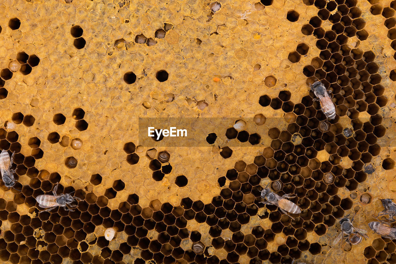Full frame shot of bees on honeycomb