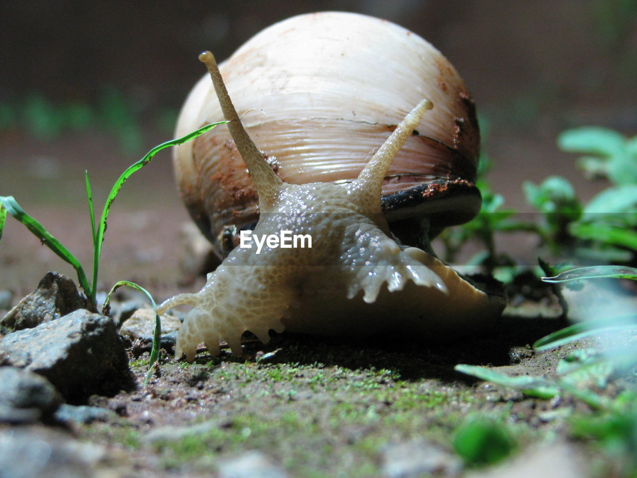 Surface Level Shot Of Snail On Field