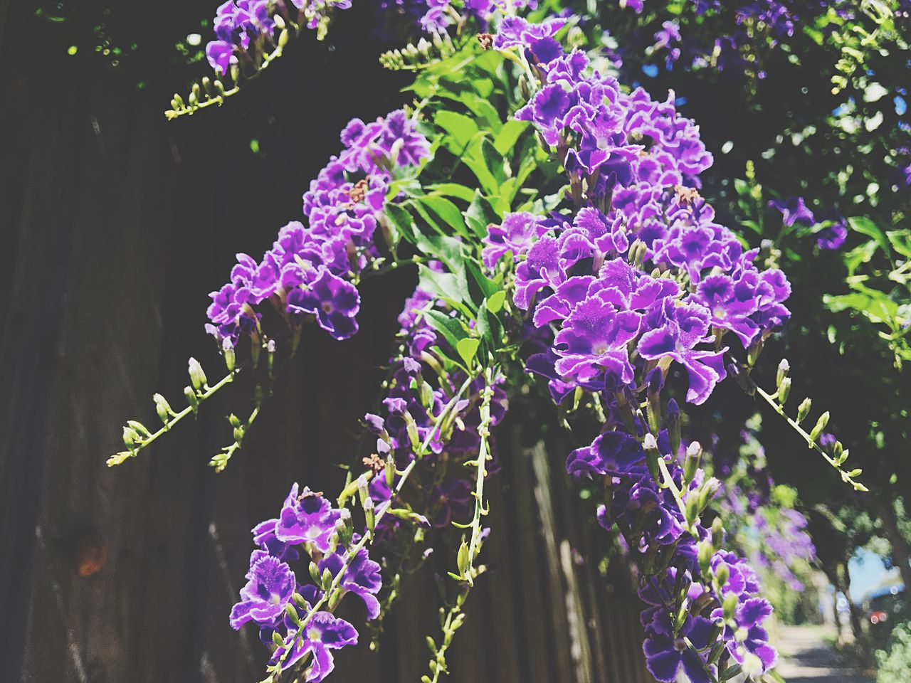 purple, growth, nature, beauty in nature, plant, fragility, flower, no people, outdoors, freshness, day, lilac, close-up, blooming