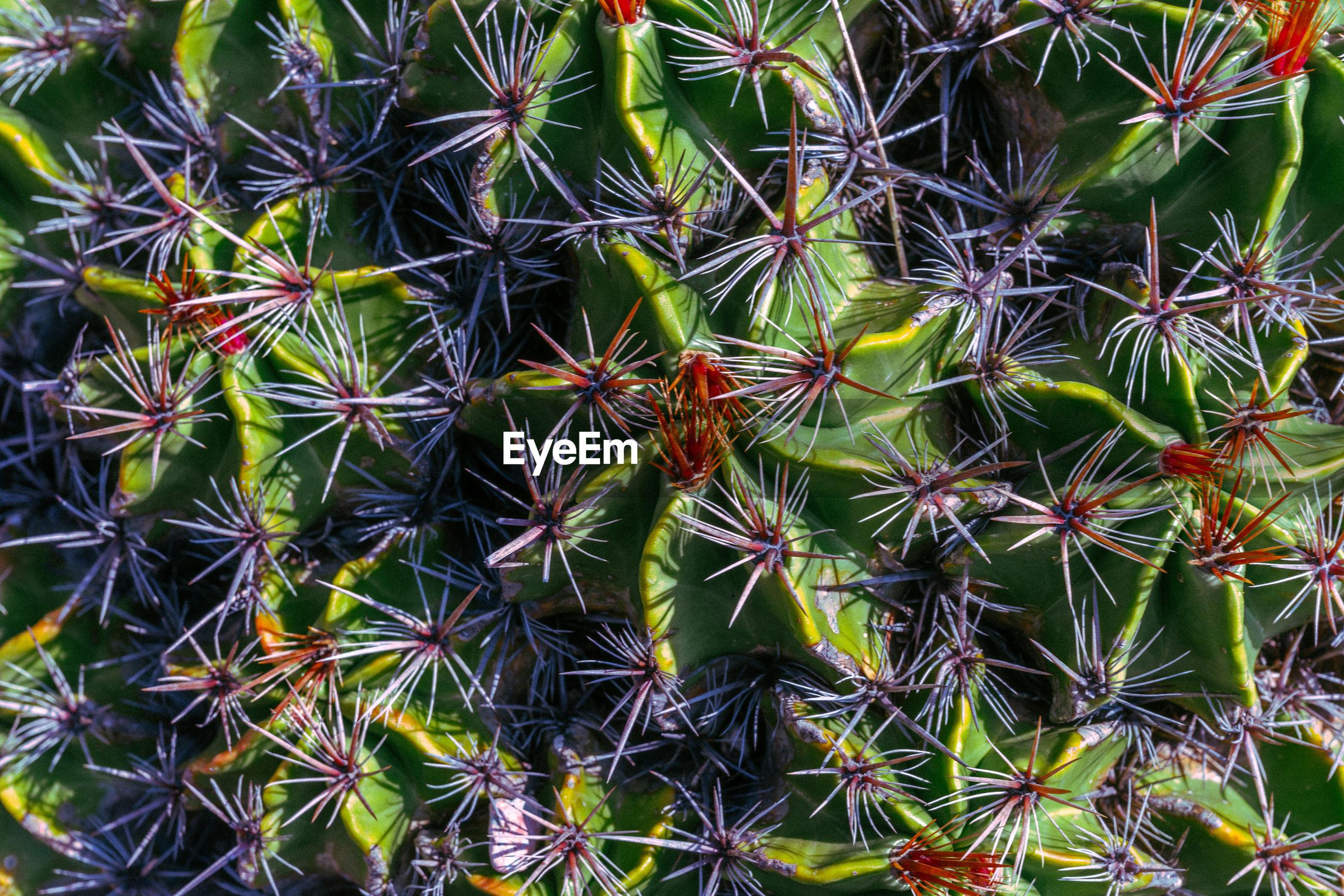 FULL FRAME OF SUCCULENT PLANT