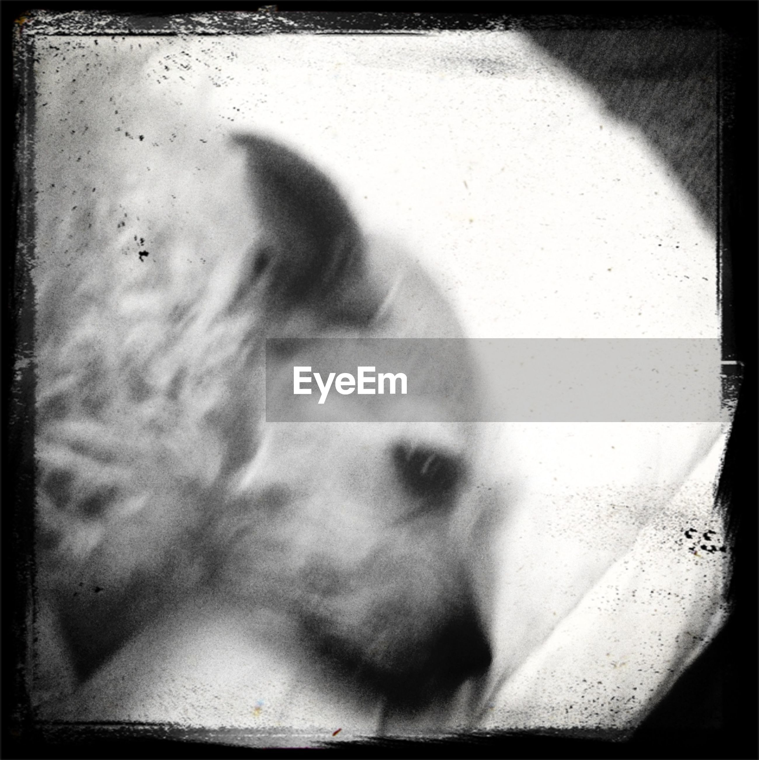 transfer print, auto post production filter, one animal, high angle view, animal themes, close-up, day, vignette, shadow, domestic animals, indoors, no people, sunlight, pets, dog, mammal, frame, wall - building feature