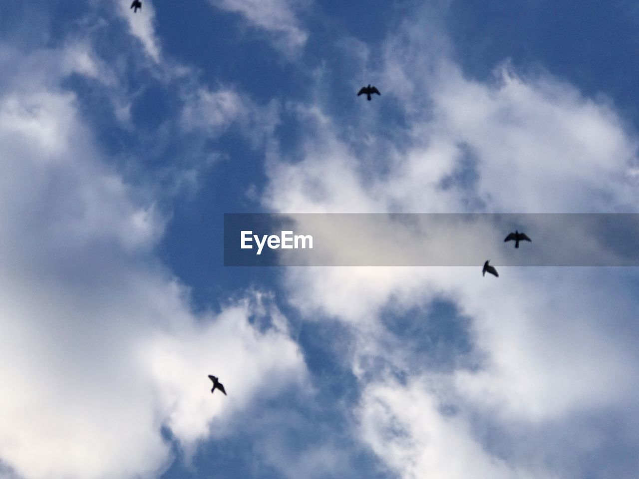flying, bird, mid-air, animals in the wild, animal themes, low angle view, spread wings, one animal, animal wildlife, sky, silhouette, wildlife, cloud - sky, flock of birds, day, outdoors, nature, no people, beauty in nature, bird of prey, paragliding
