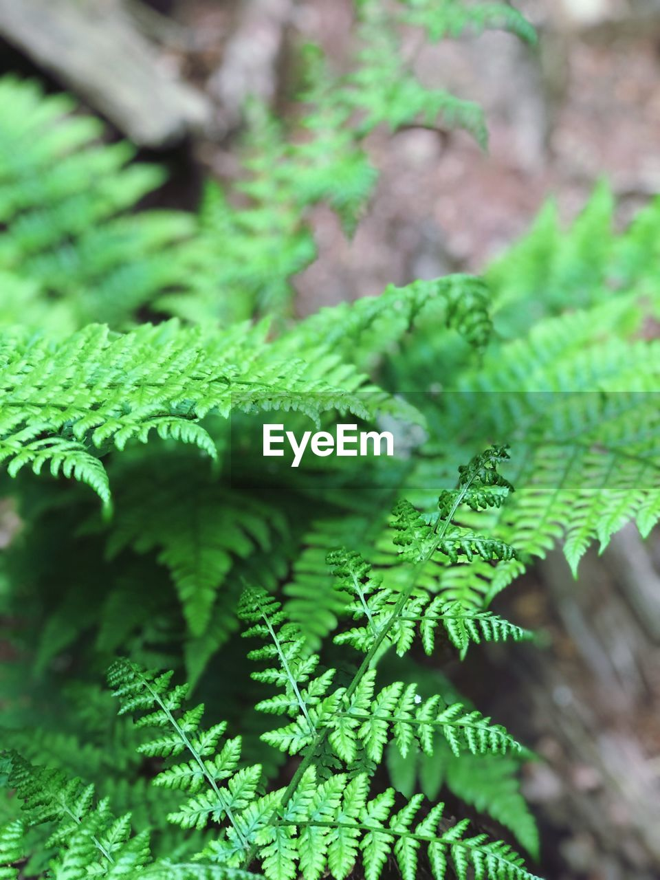 green color, growth, plant, leaf, plant part, day, no people, nature, close-up, beauty in nature, fern, selective focus, focus on foreground, tree, outdoors, tranquility, freshness, forest, land, high angle view, pine tree, coniferous tree