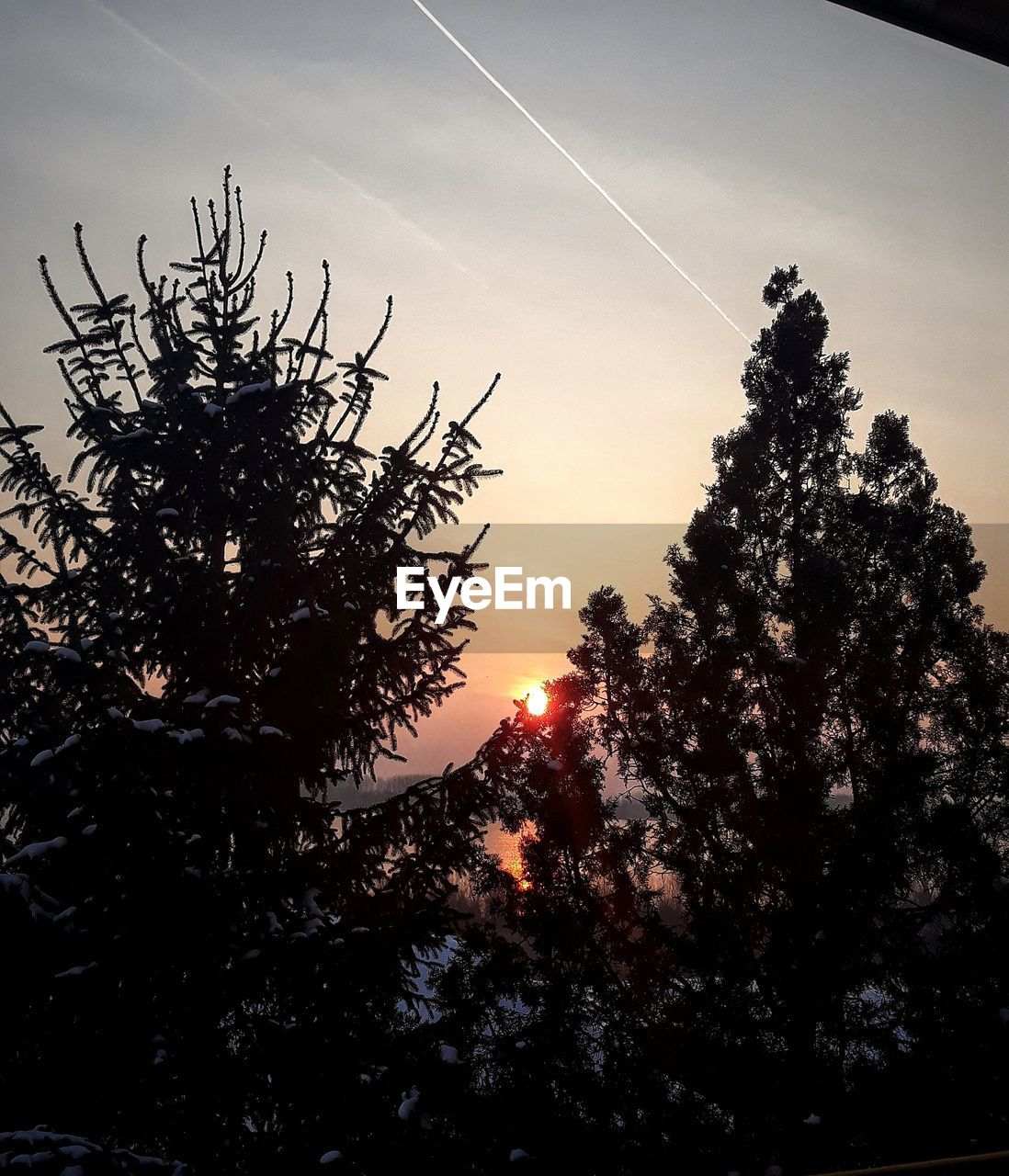 tree, silhouette, nature, beauty in nature, growth, no people, tranquility, sky, outdoors, branch, sunset, scenics, vapor trail, day, contrail