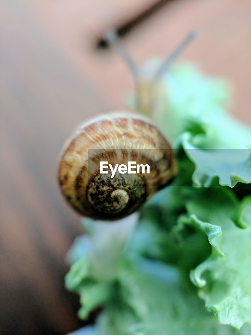 shell, animal wildlife, close-up, animal, animal shell, mollusk, gastropod, selective focus, snail, invertebrate, animal themes, no people, nature, spiral, beauty in nature, one animal, animals in the wild, day, plant, focus on foreground, outdoors