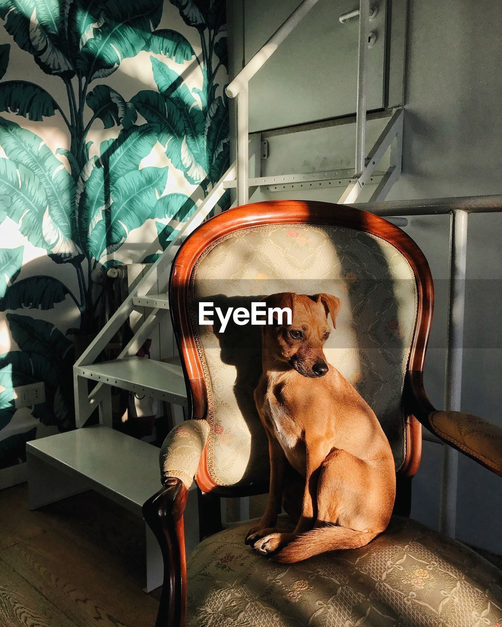 Dog sitting on chair at home