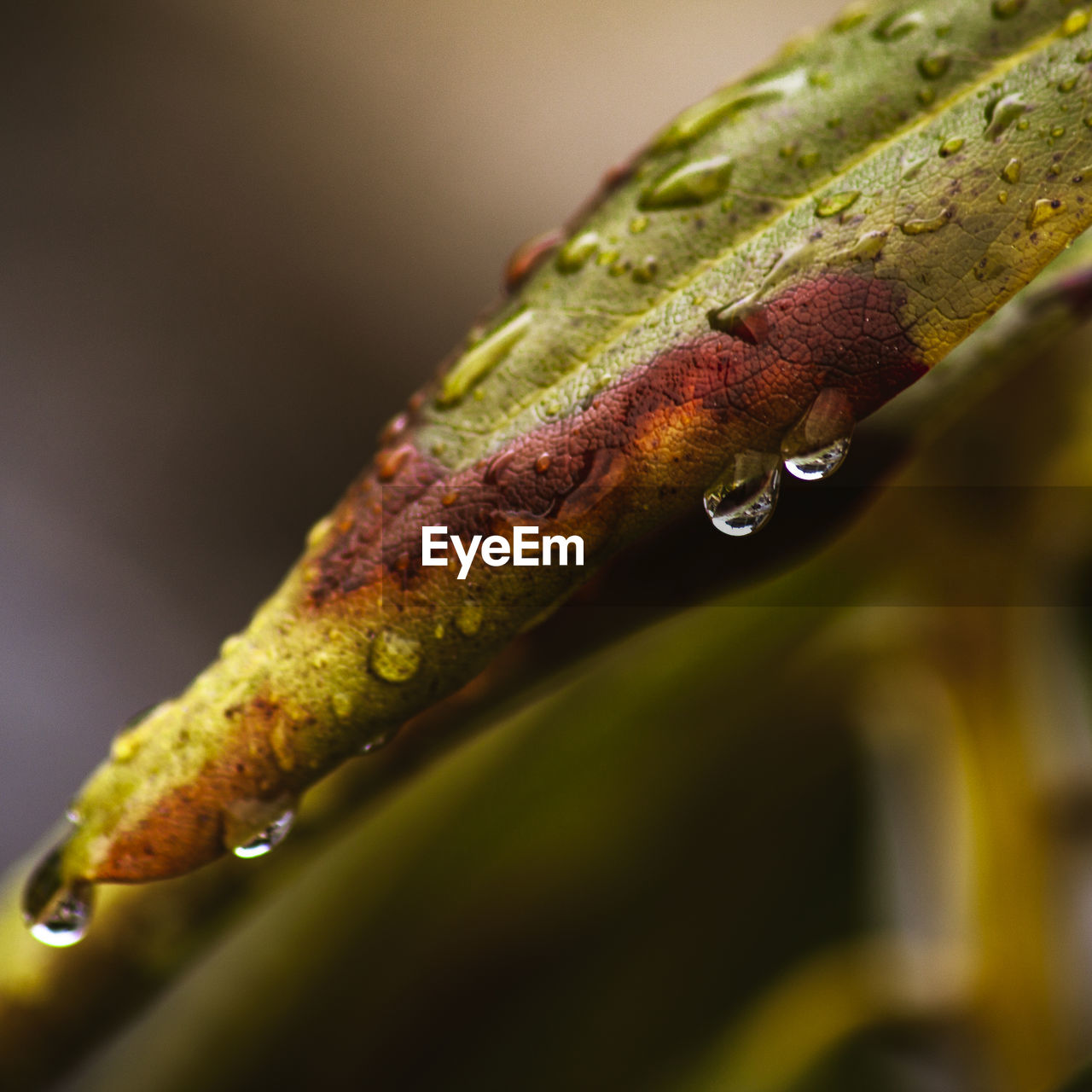 close-up, plant, selective focus, plant part, leaf, no people, nature, green color, growth, animal wildlife, focus on foreground, day, animal, animal themes, animals in the wild, one animal, drop, wet, outdoors, beauty in nature