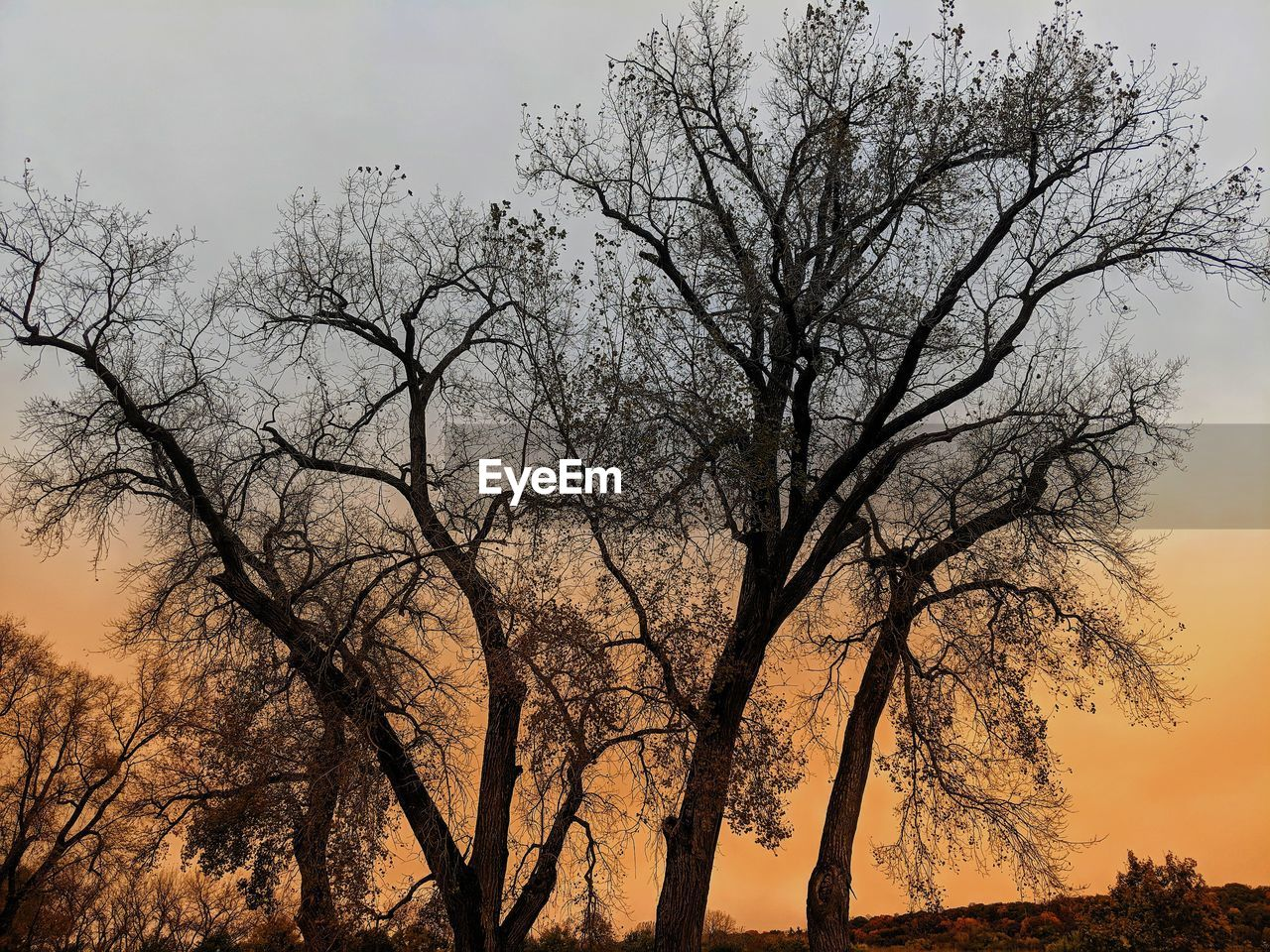 tree, plant, sky, silhouette, bare tree, branch, no people, beauty in nature, nature, tranquility, low angle view, scenics - nature, sunset, outdoors, tranquil scene, growth, non-urban scene, tree trunk, trunk, clear sky